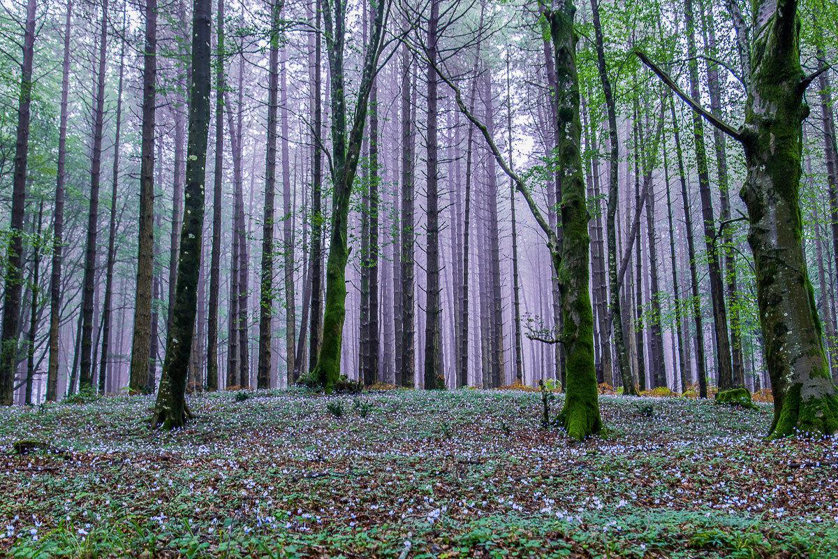Woods of Aspromonte...