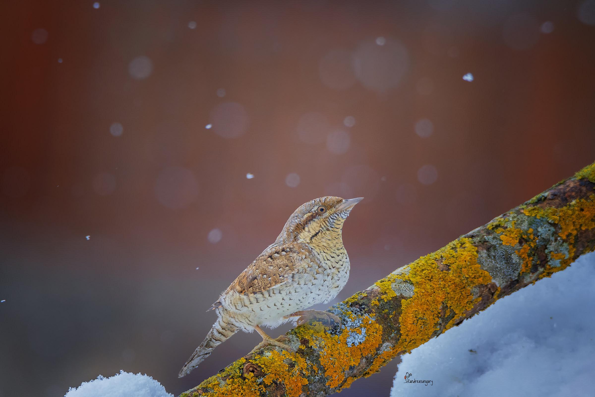 Il torcicollo delle nevi...