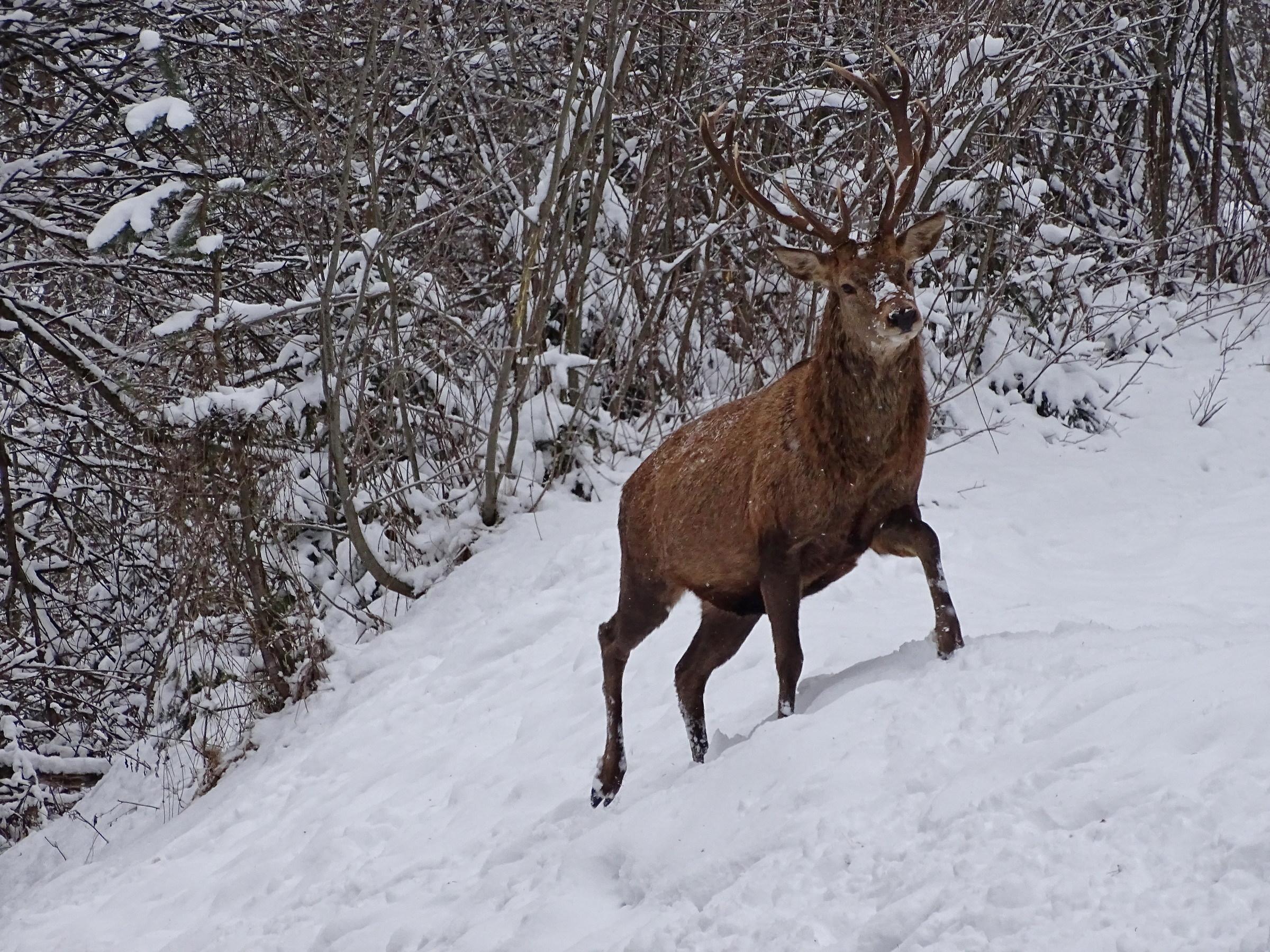 Il re del bosco dietro casa...