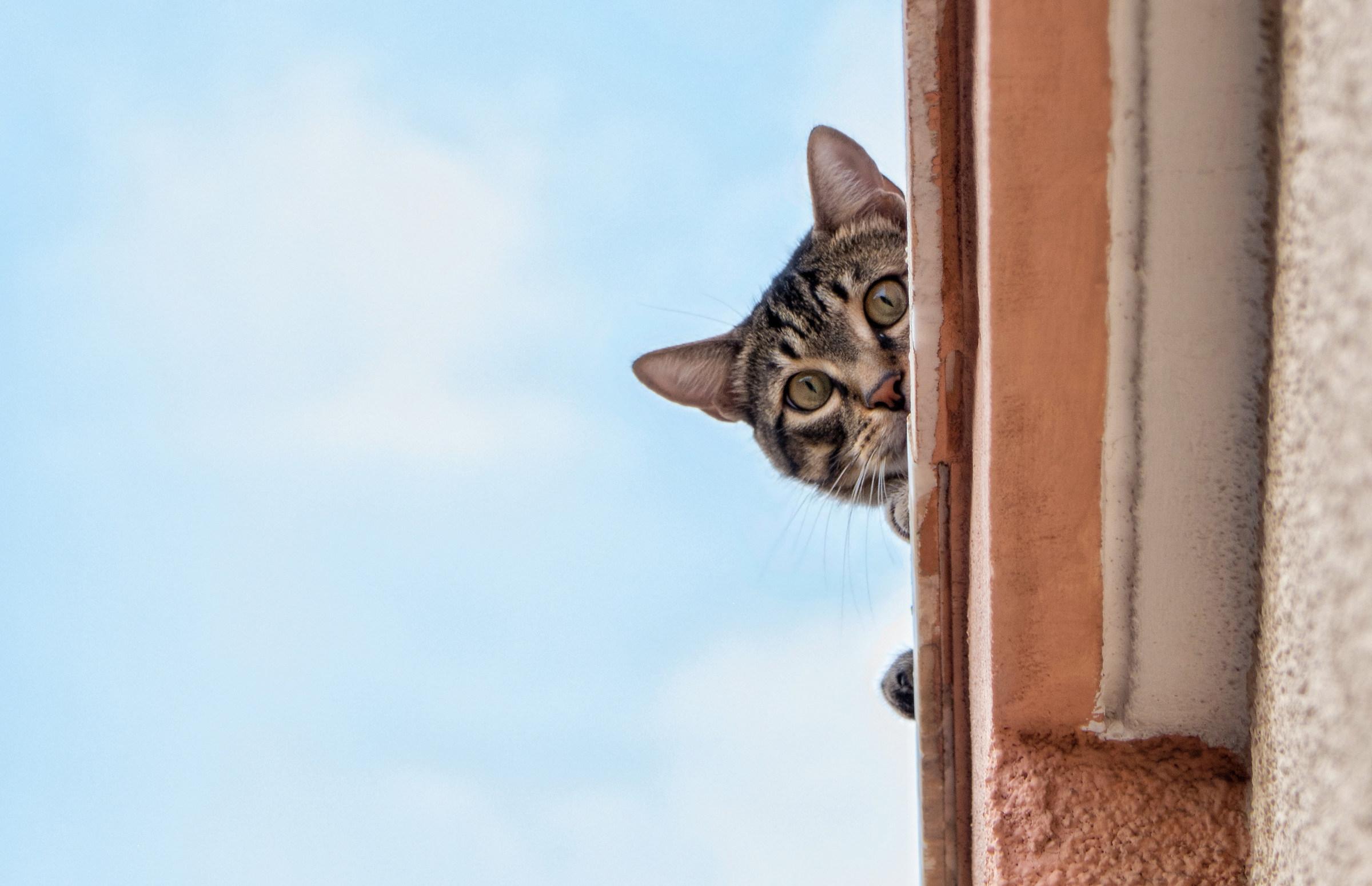 The upstairs neighbor...
