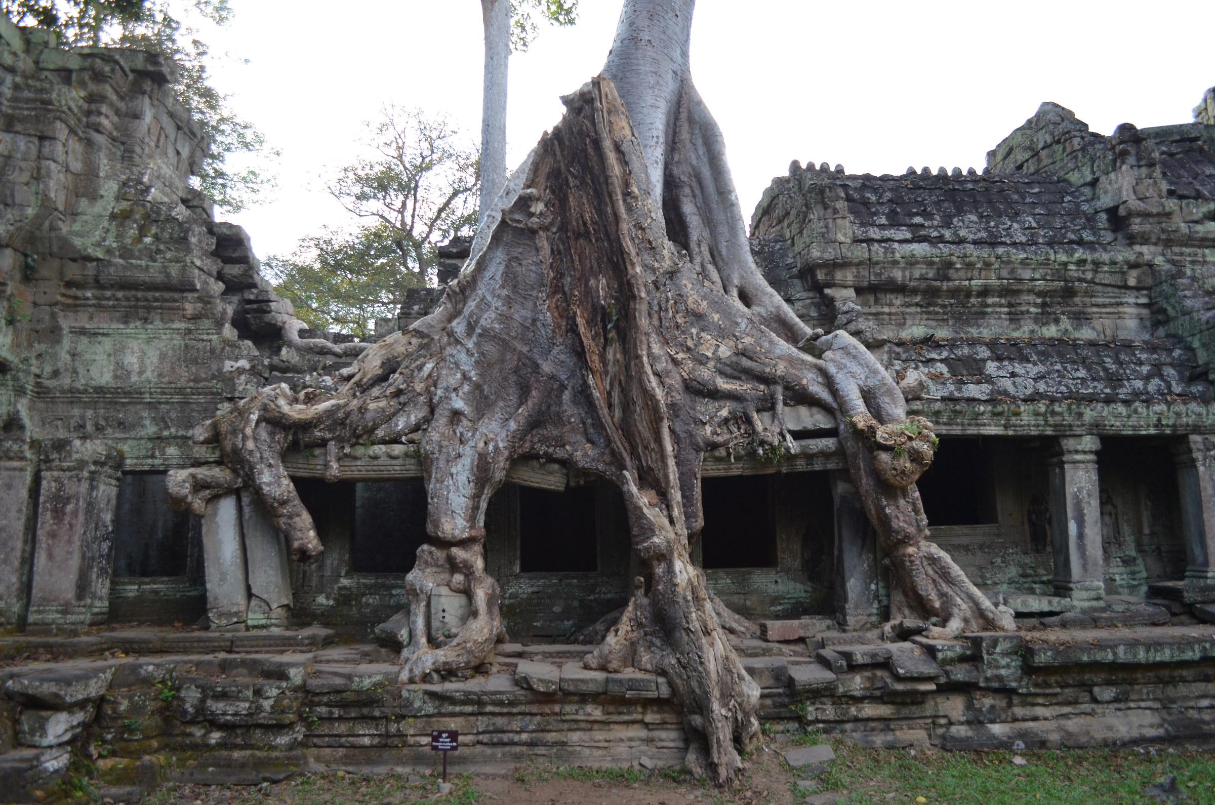 Templio at Angkor...