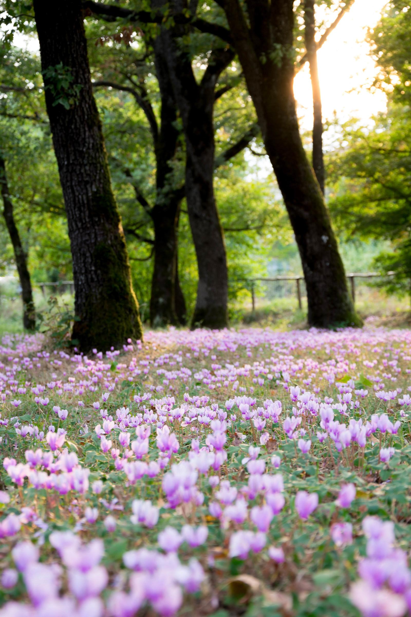 Sogno d'autunno...