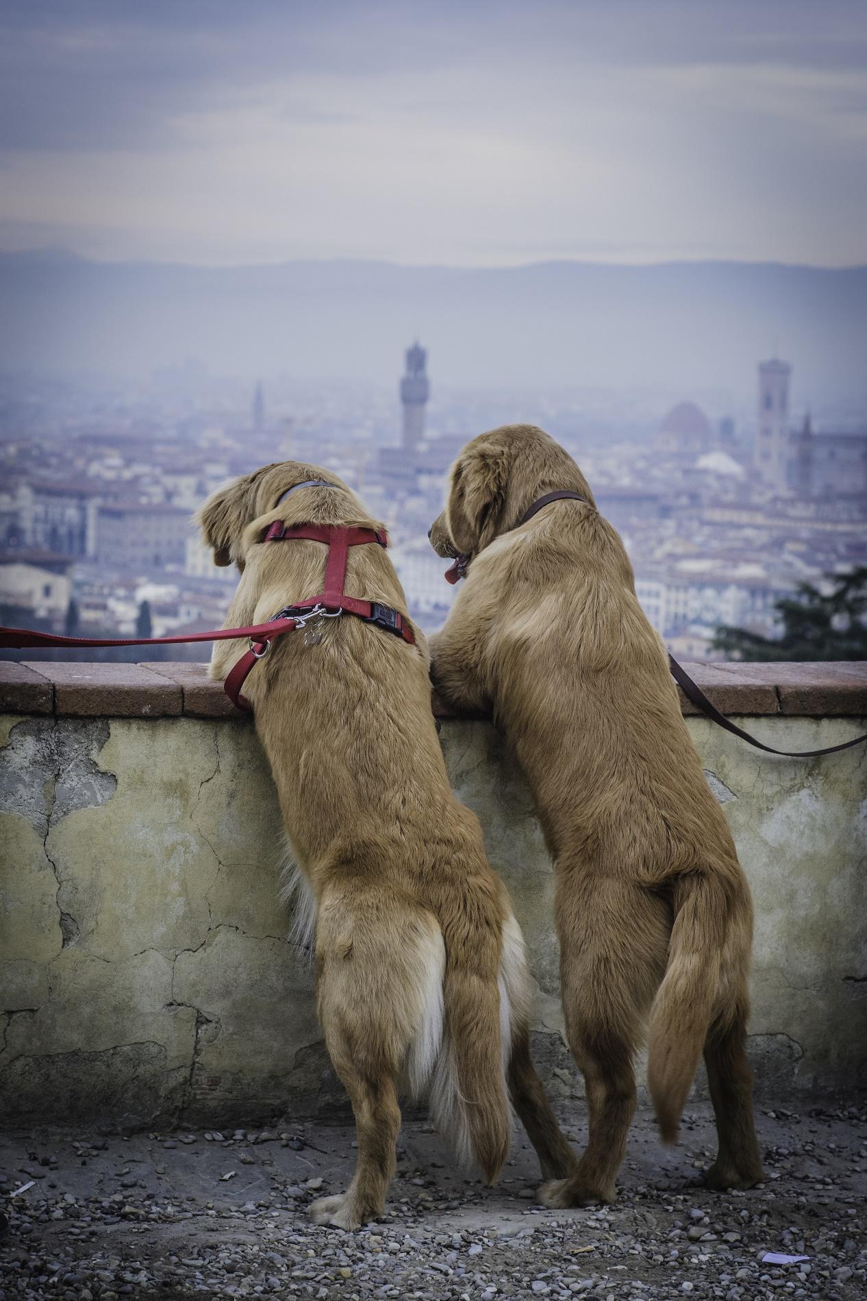 Innamorati a Piazzale Michelangelo...