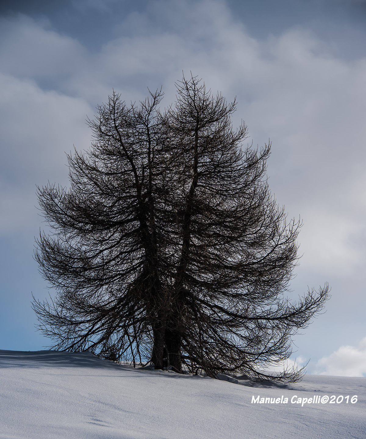 the old tree...