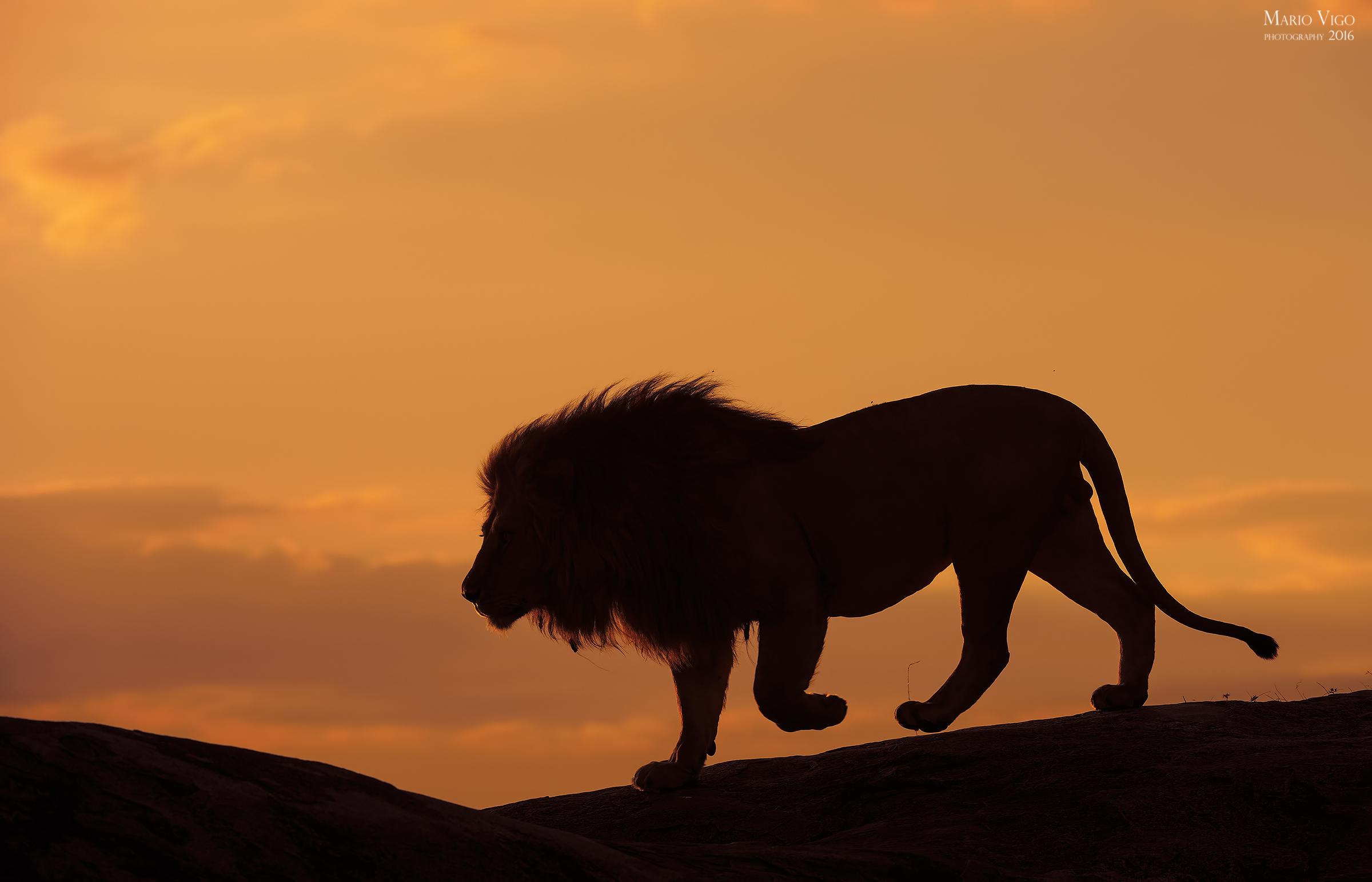Sunset in the Serengeti...