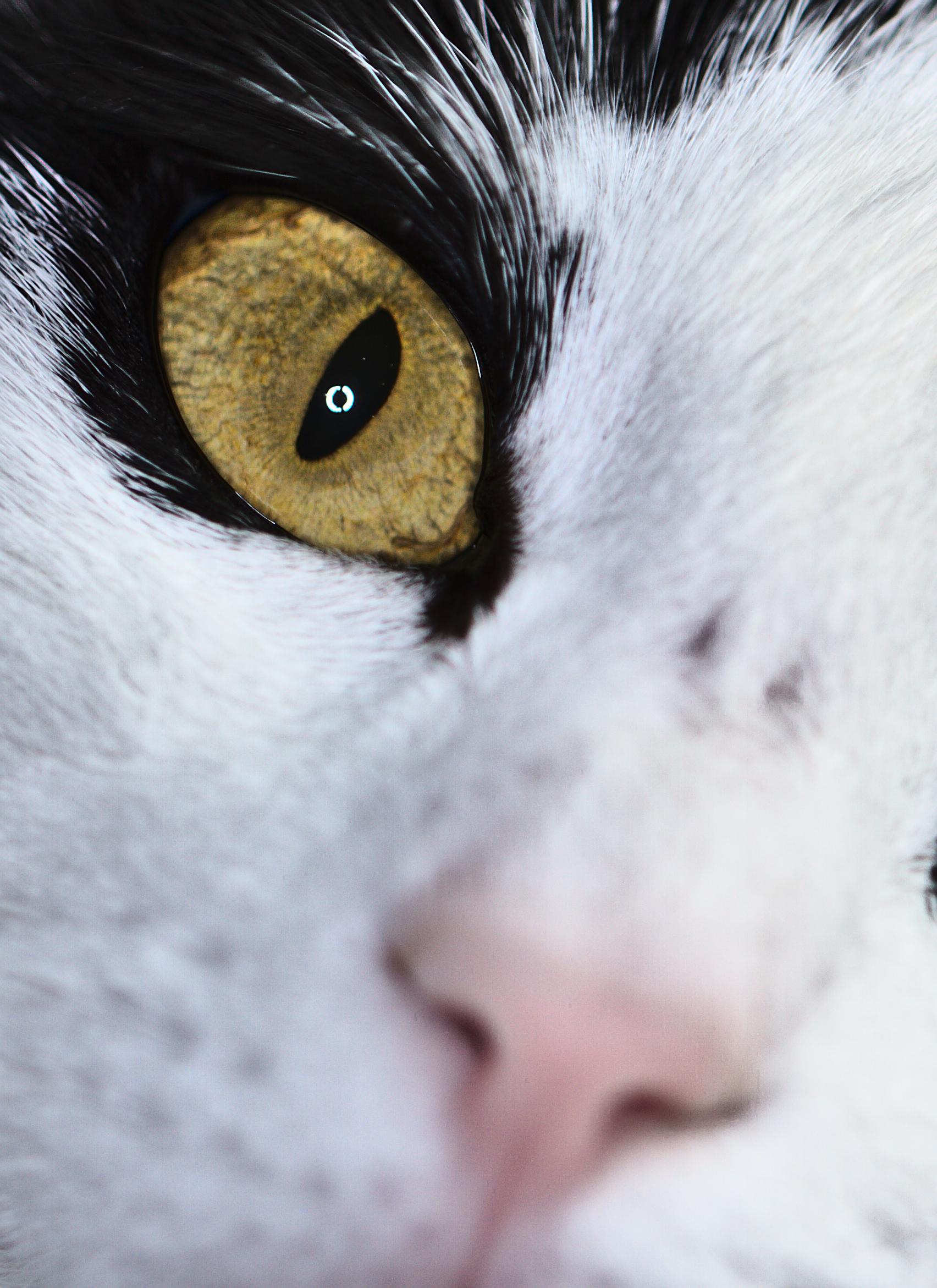 Cat's eye...