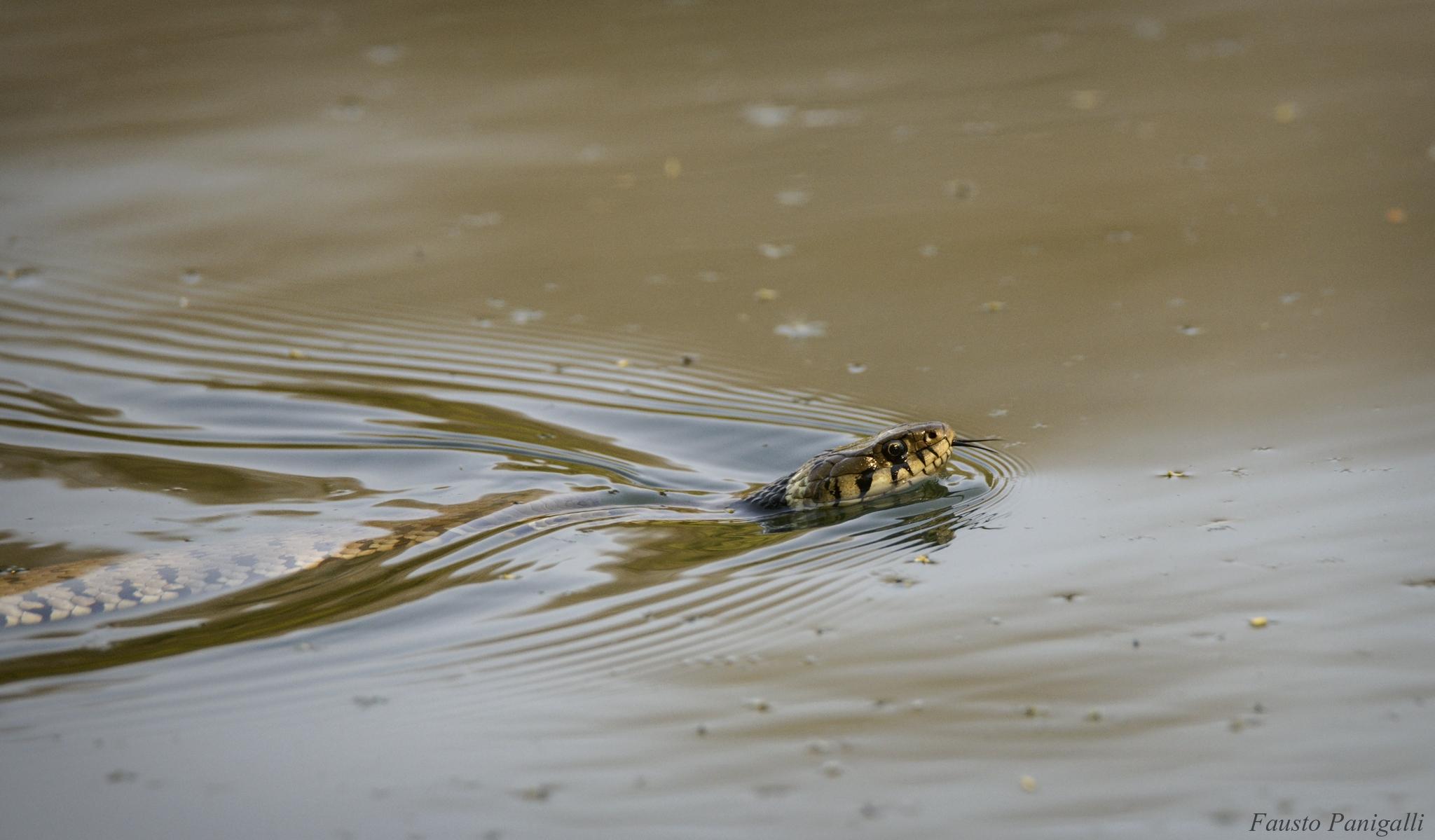 Water snake...
