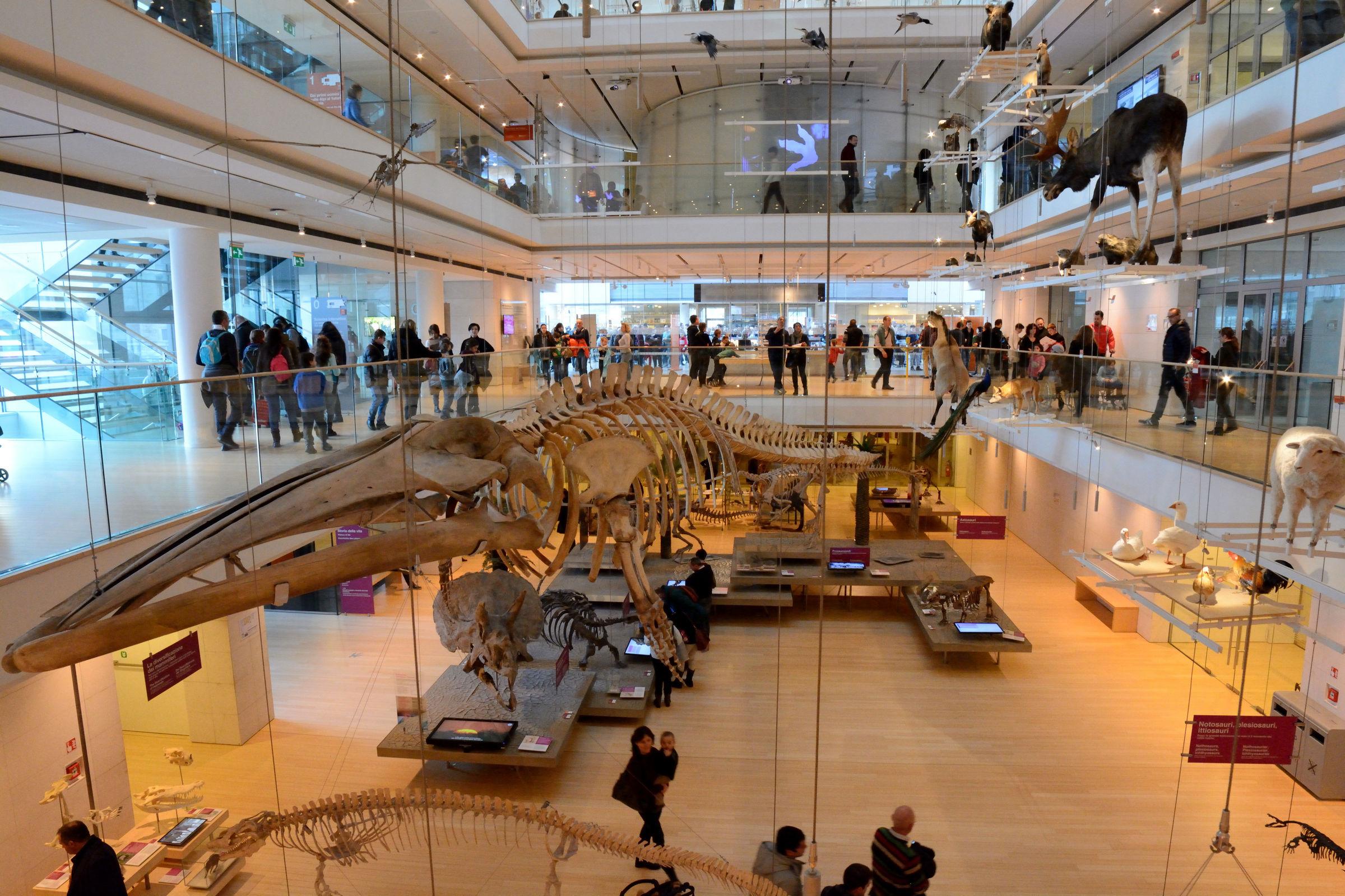 Museo delle scienze trento juzaphoto for Mercatino usato trento