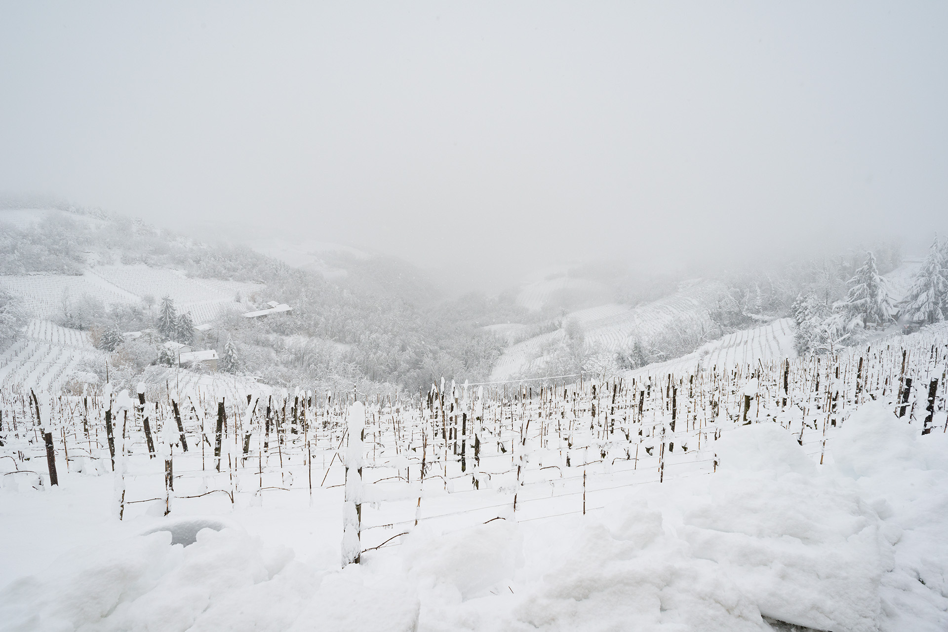 Vineyards and snow...
