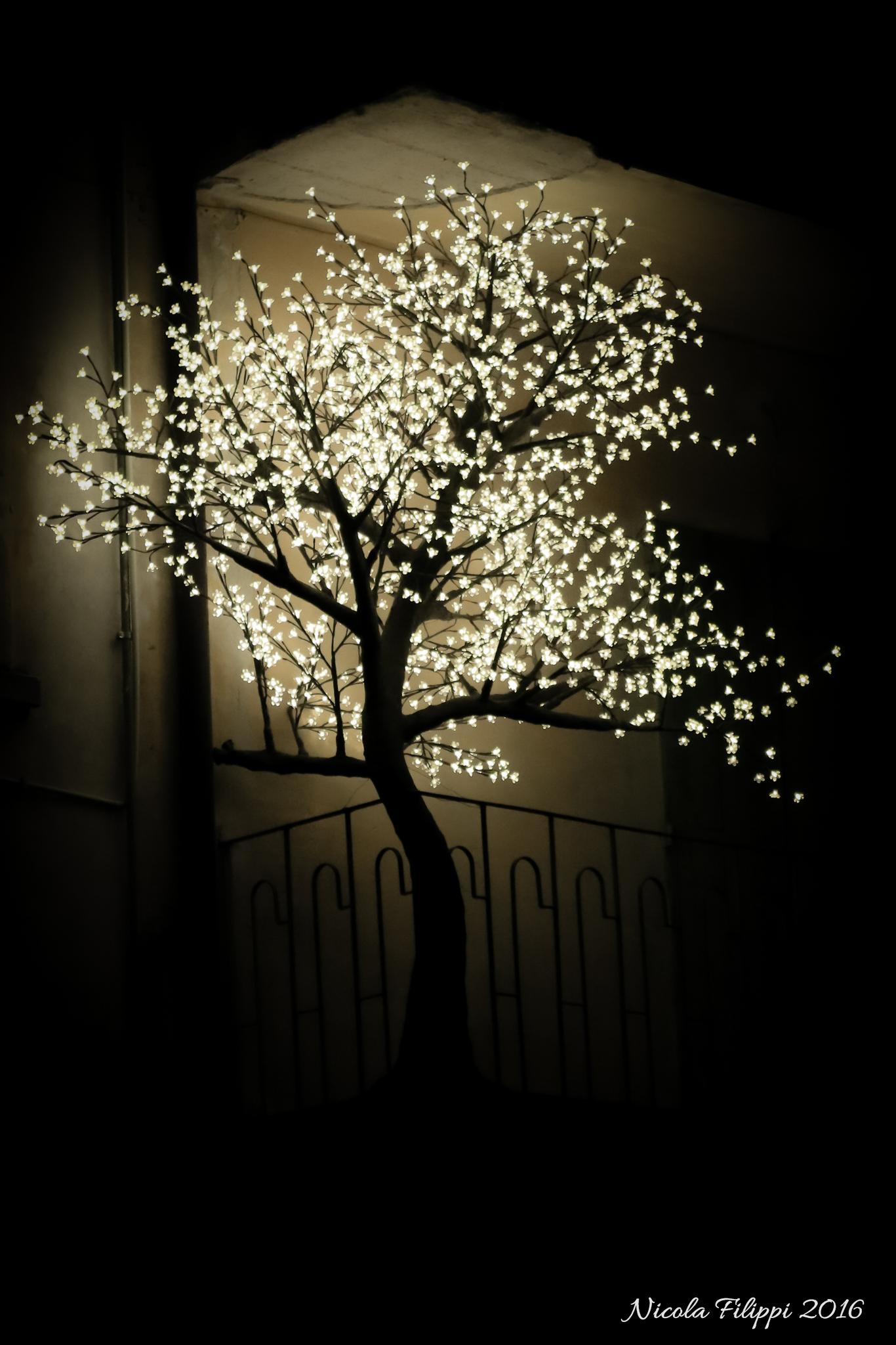 un albero Luminoso...