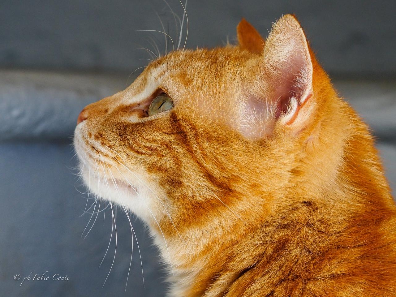 Fruby, the cat ......