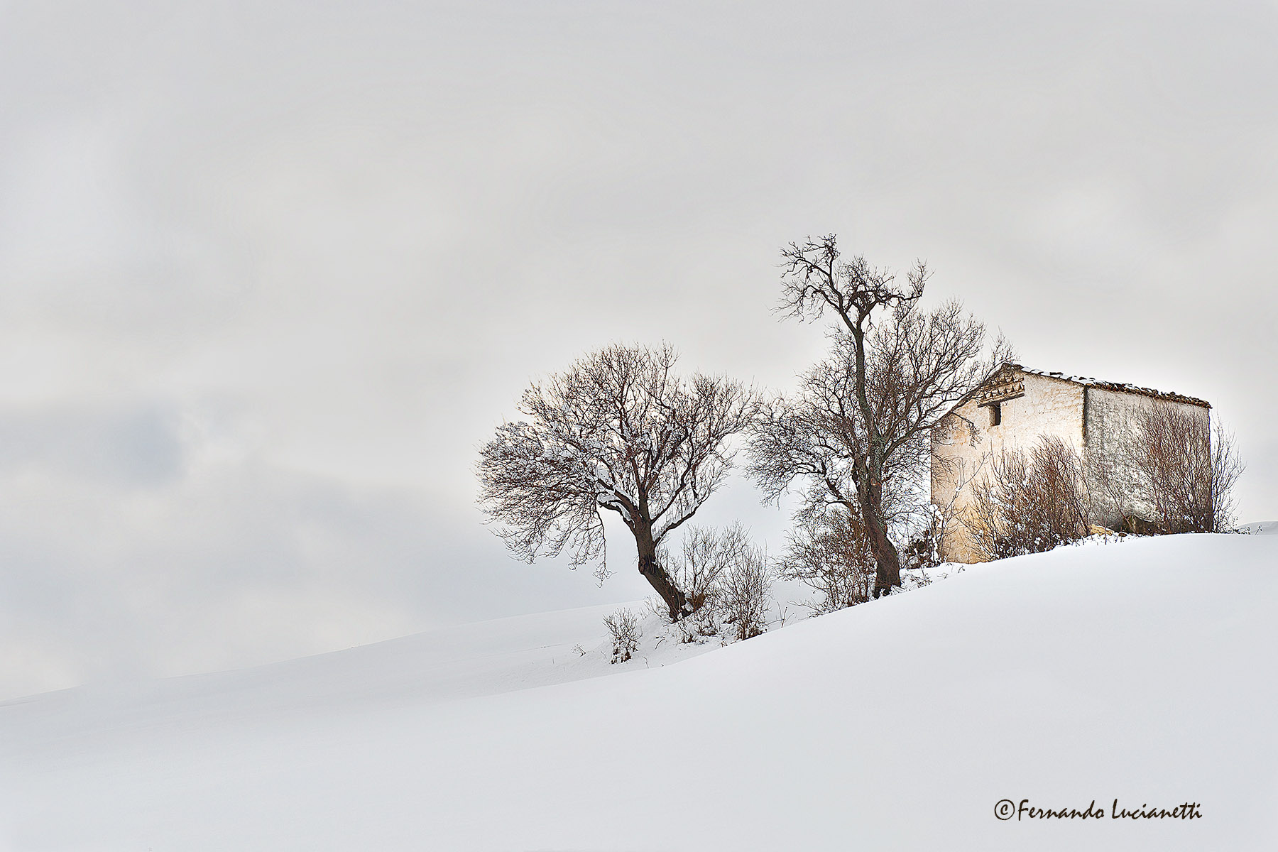 white winter...