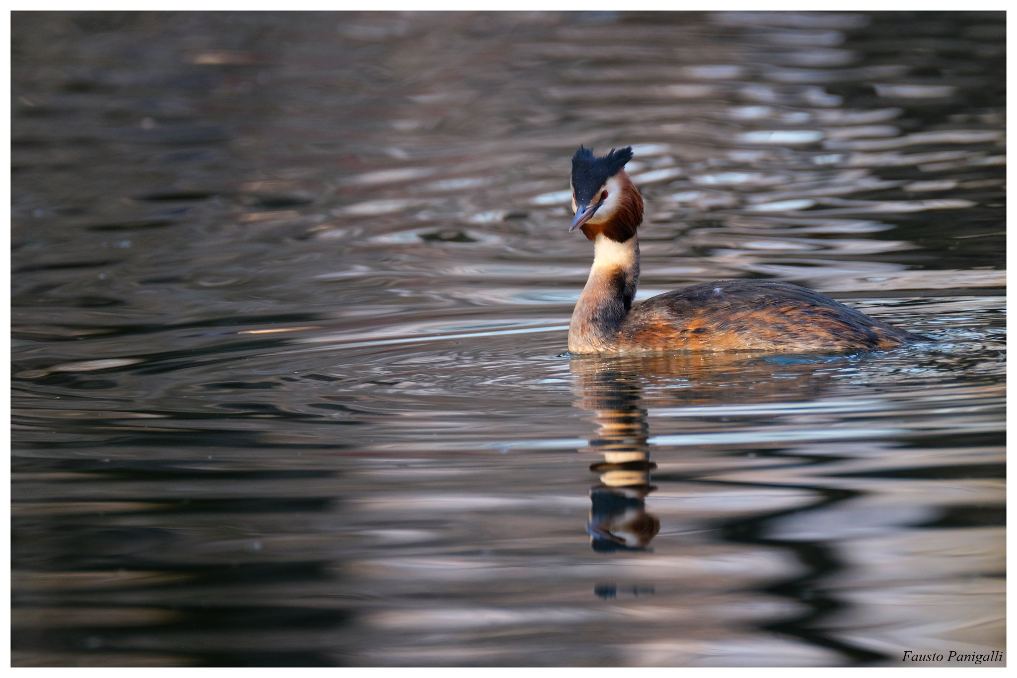 Grebe, Lake Endine (bg)...