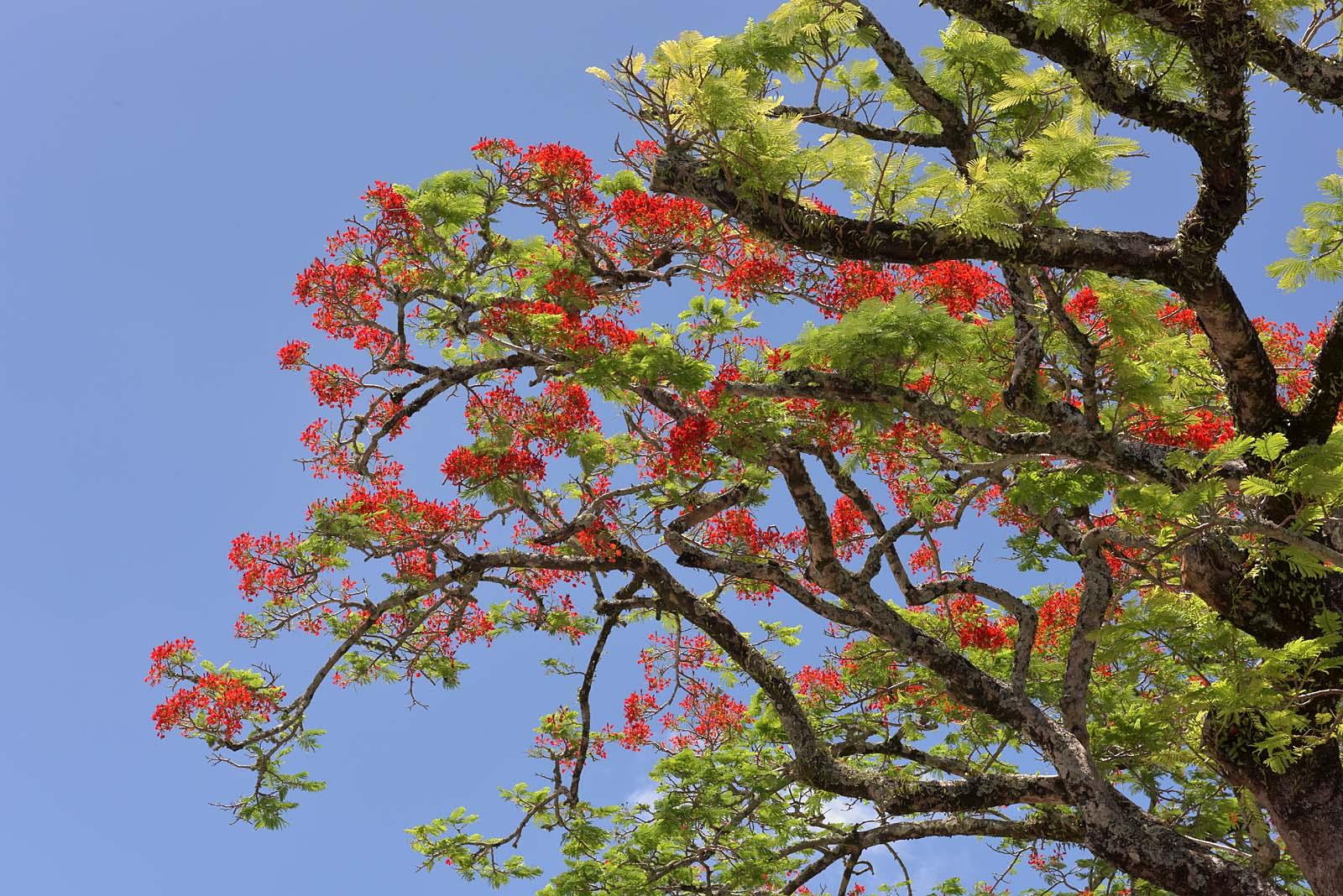 Rarotonga, Cook Islands...