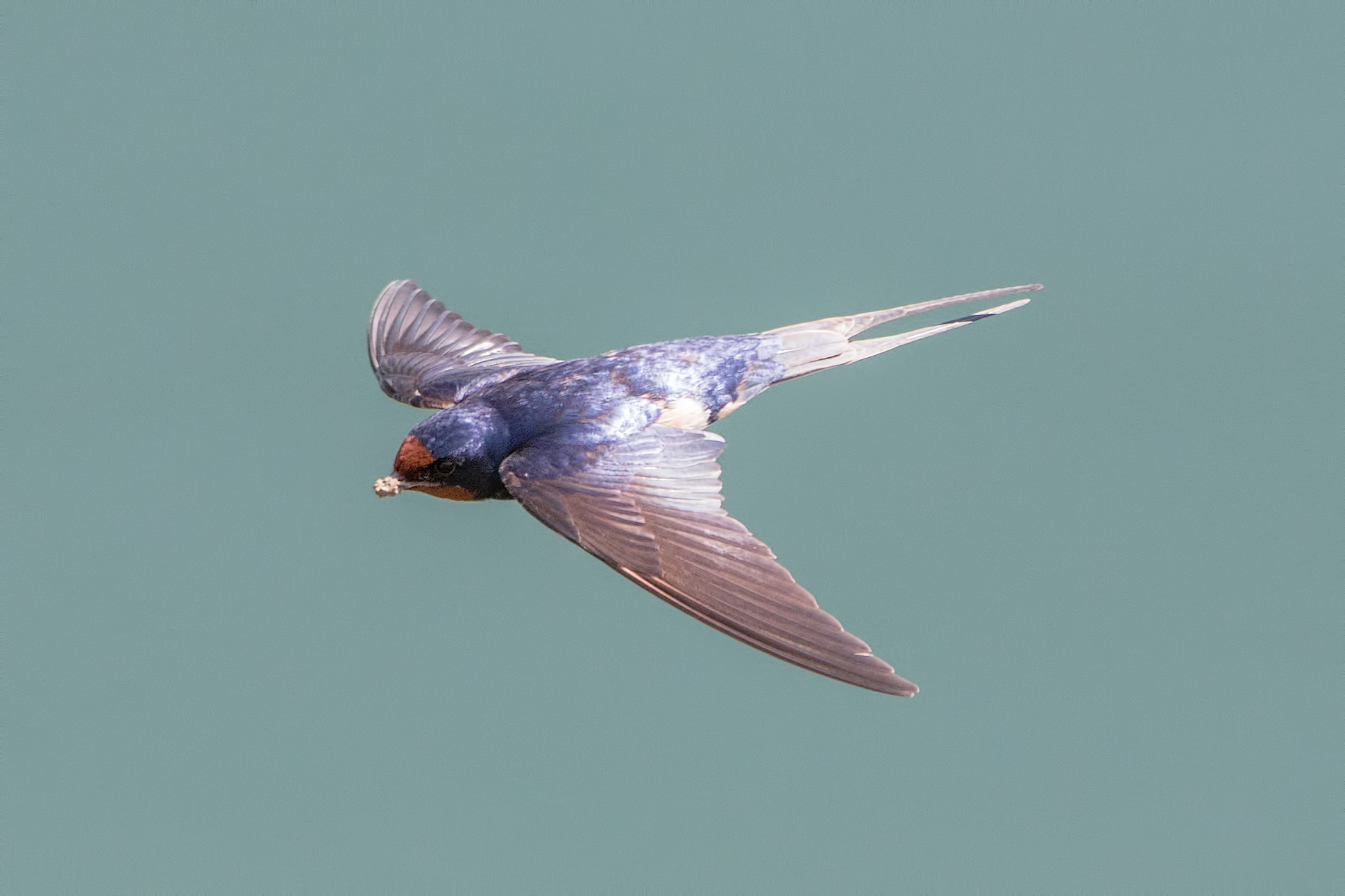 Finally spring - swallows that nest...