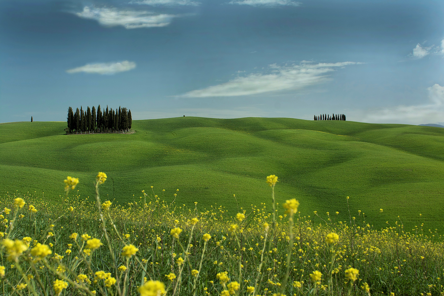 Cypress grove Val d'Orcia...