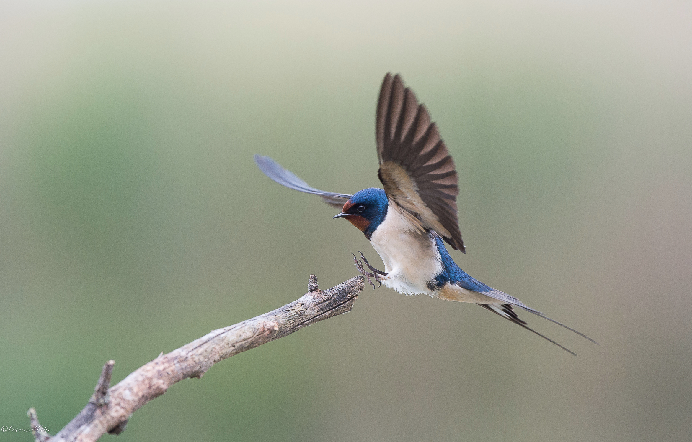 Swallow...