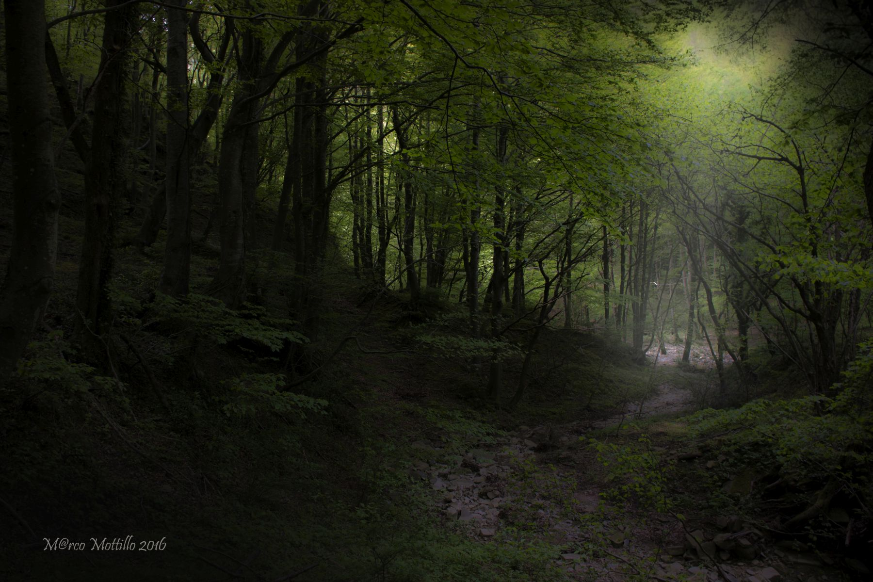 In the woods...