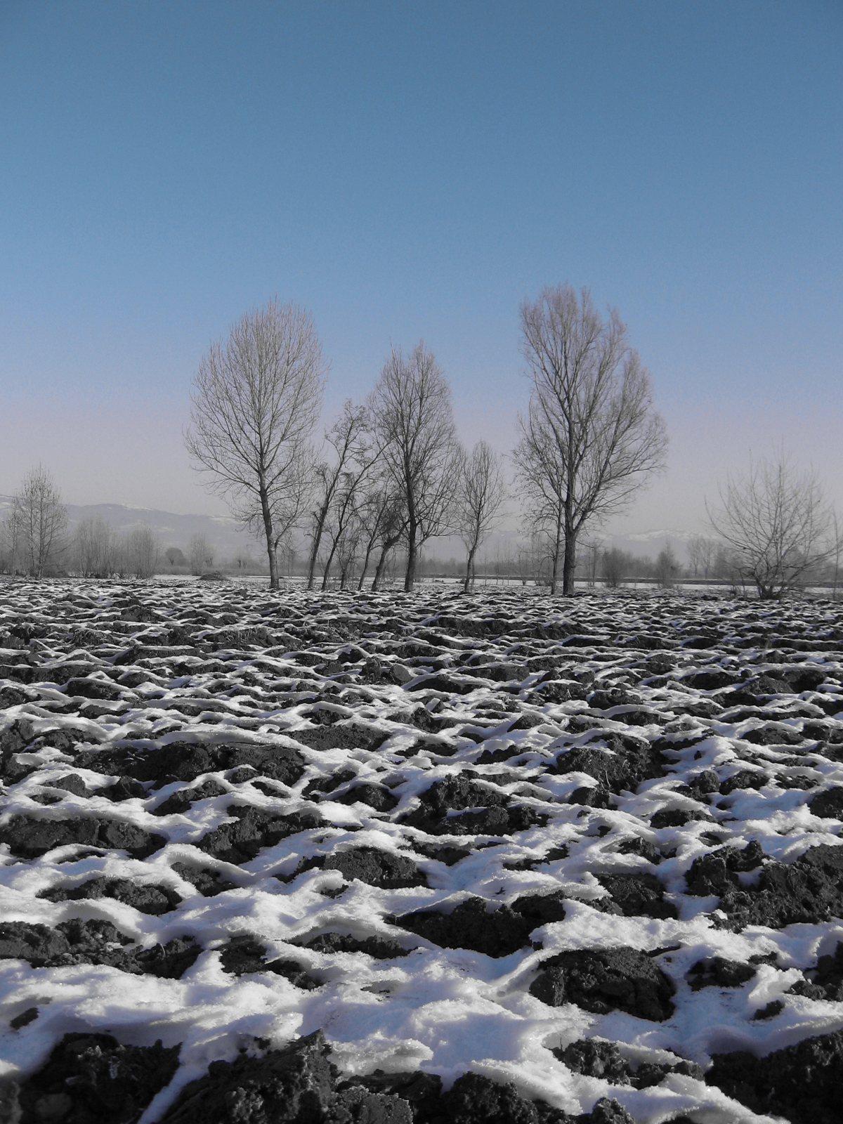 Alberi attraversano l'inverno...