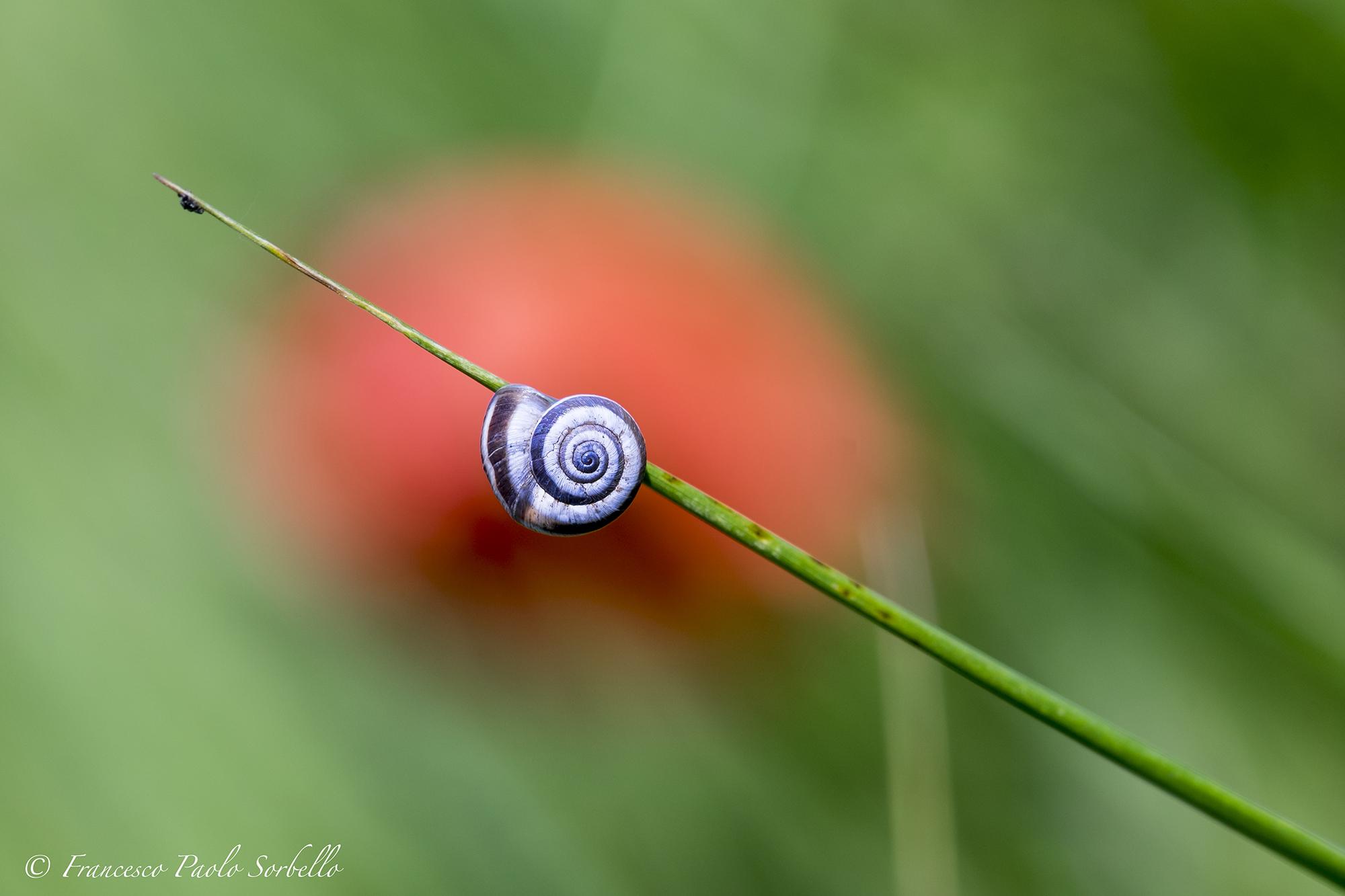 spirals...