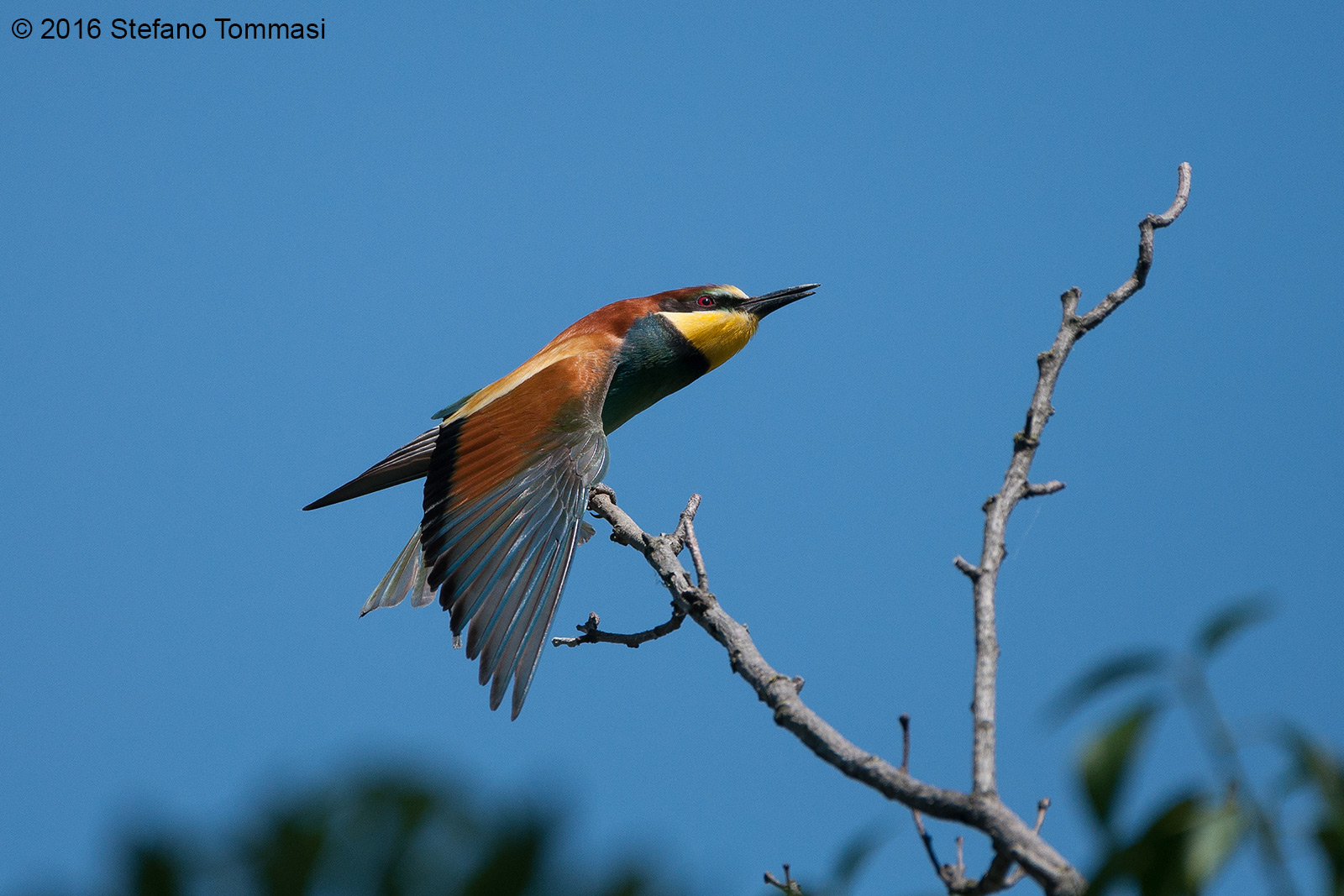 All colors of bee-eater...