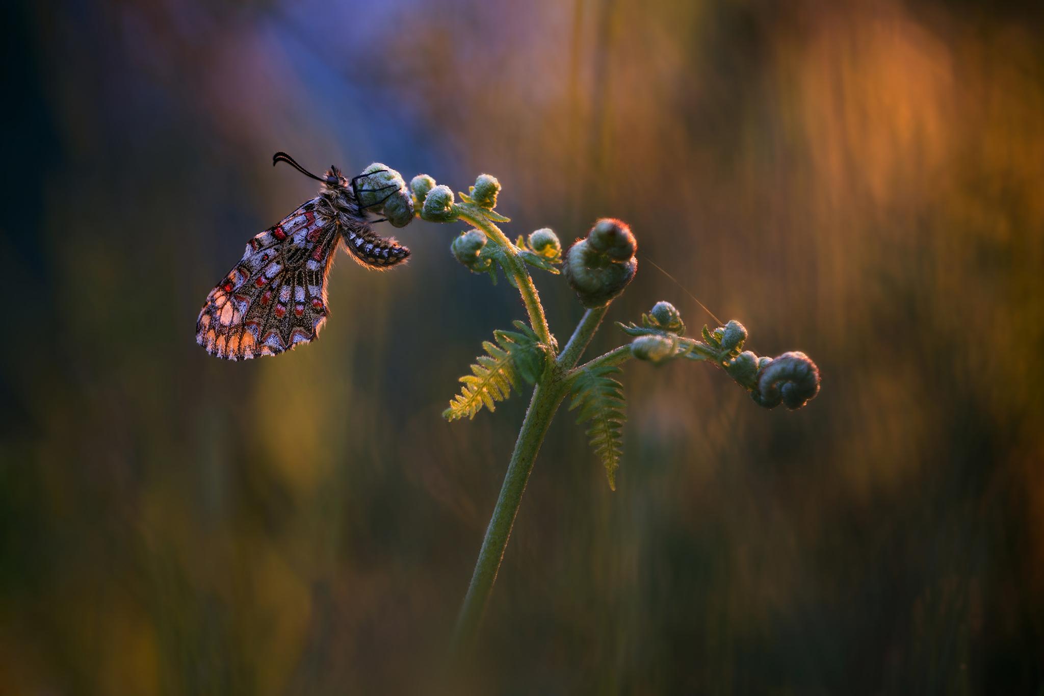 бабочка папоротник  № 3138399 без смс