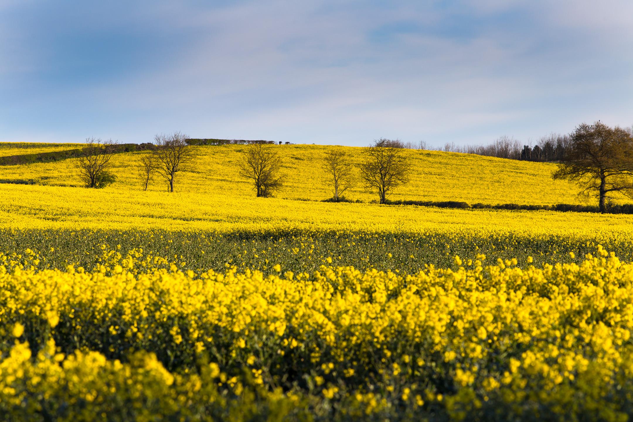 I campi in Aprile...
