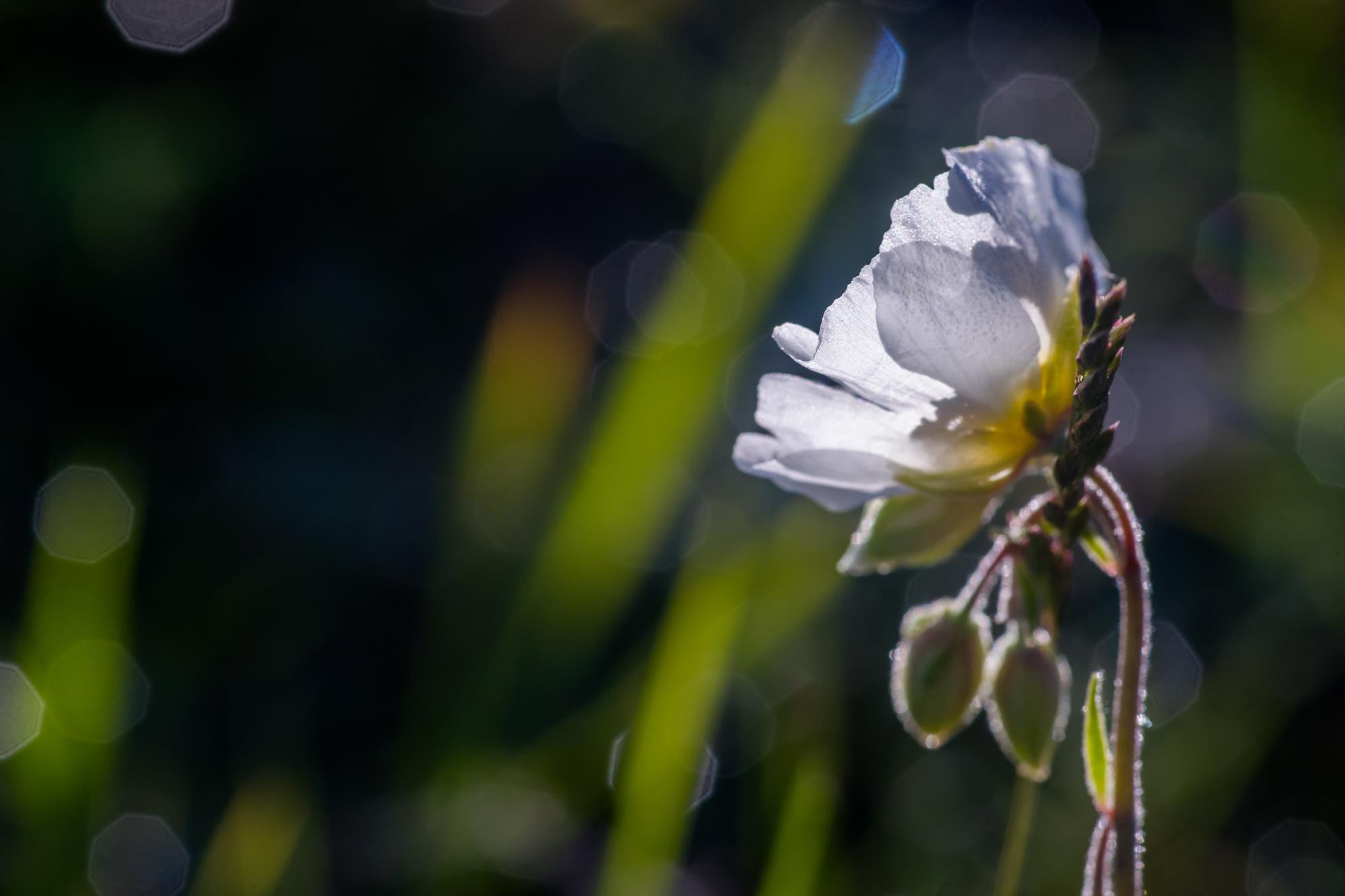 flower dawn...