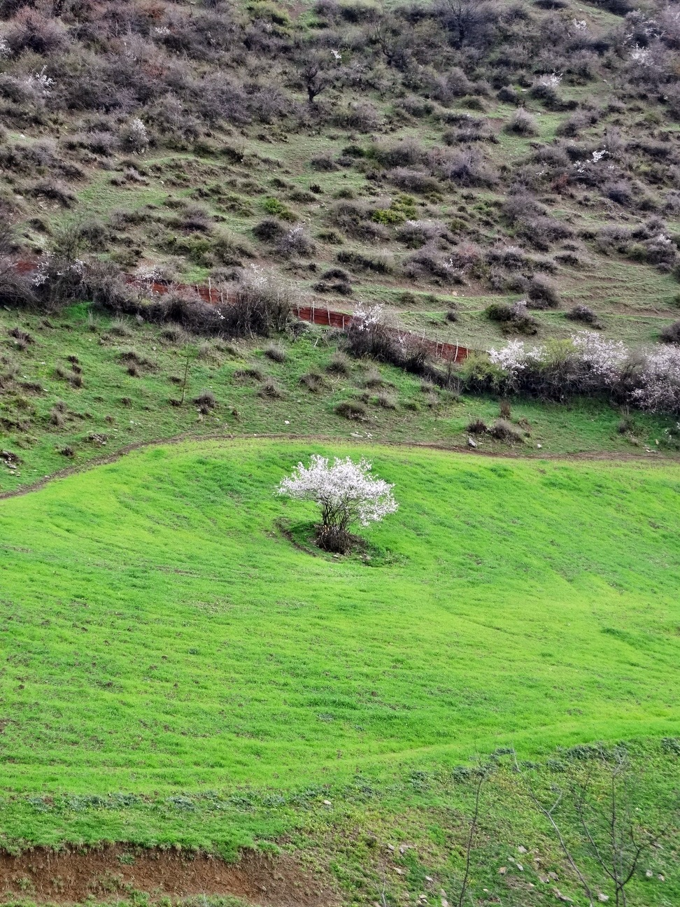 alone tree...
