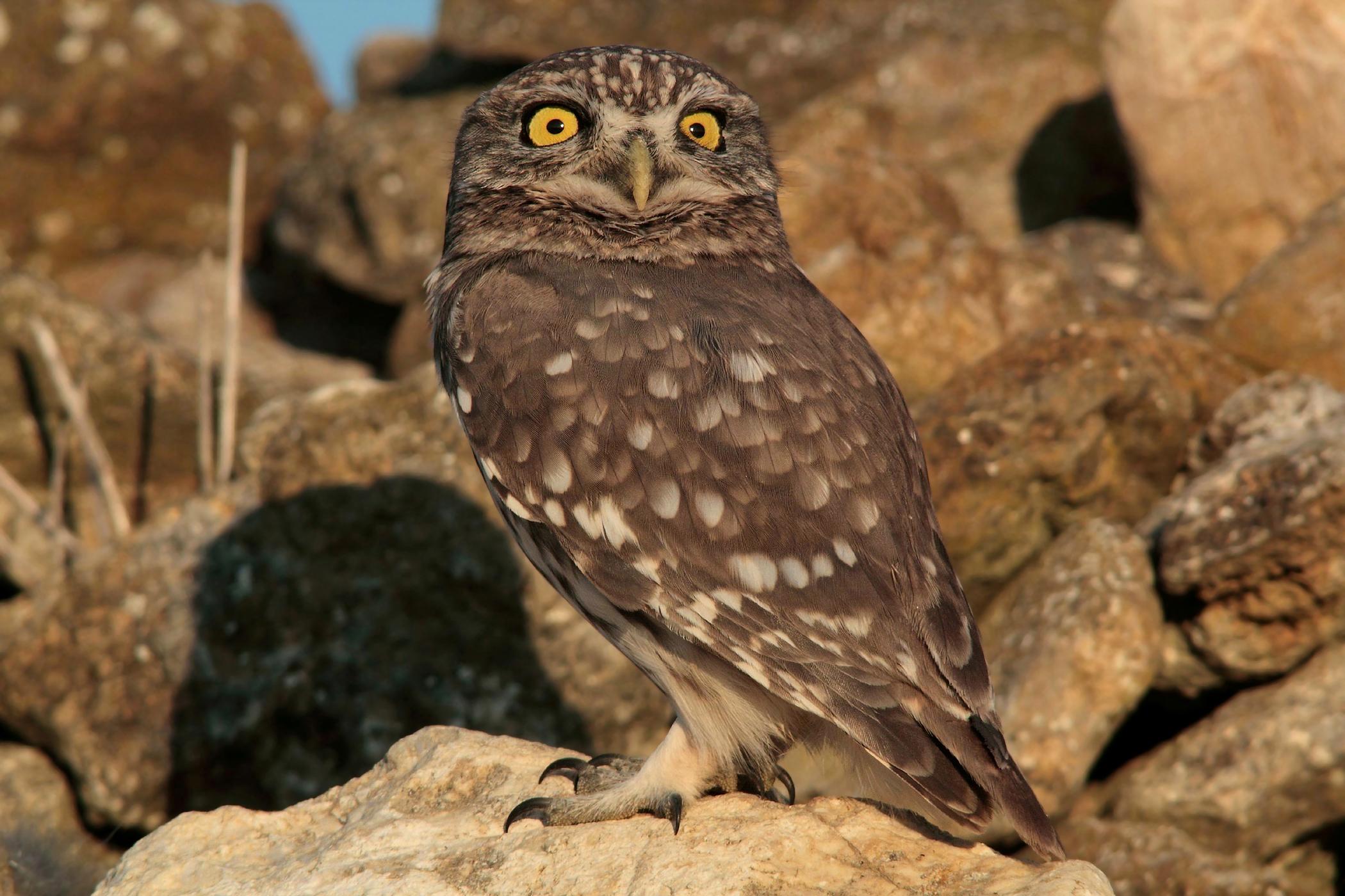 The owl alert...