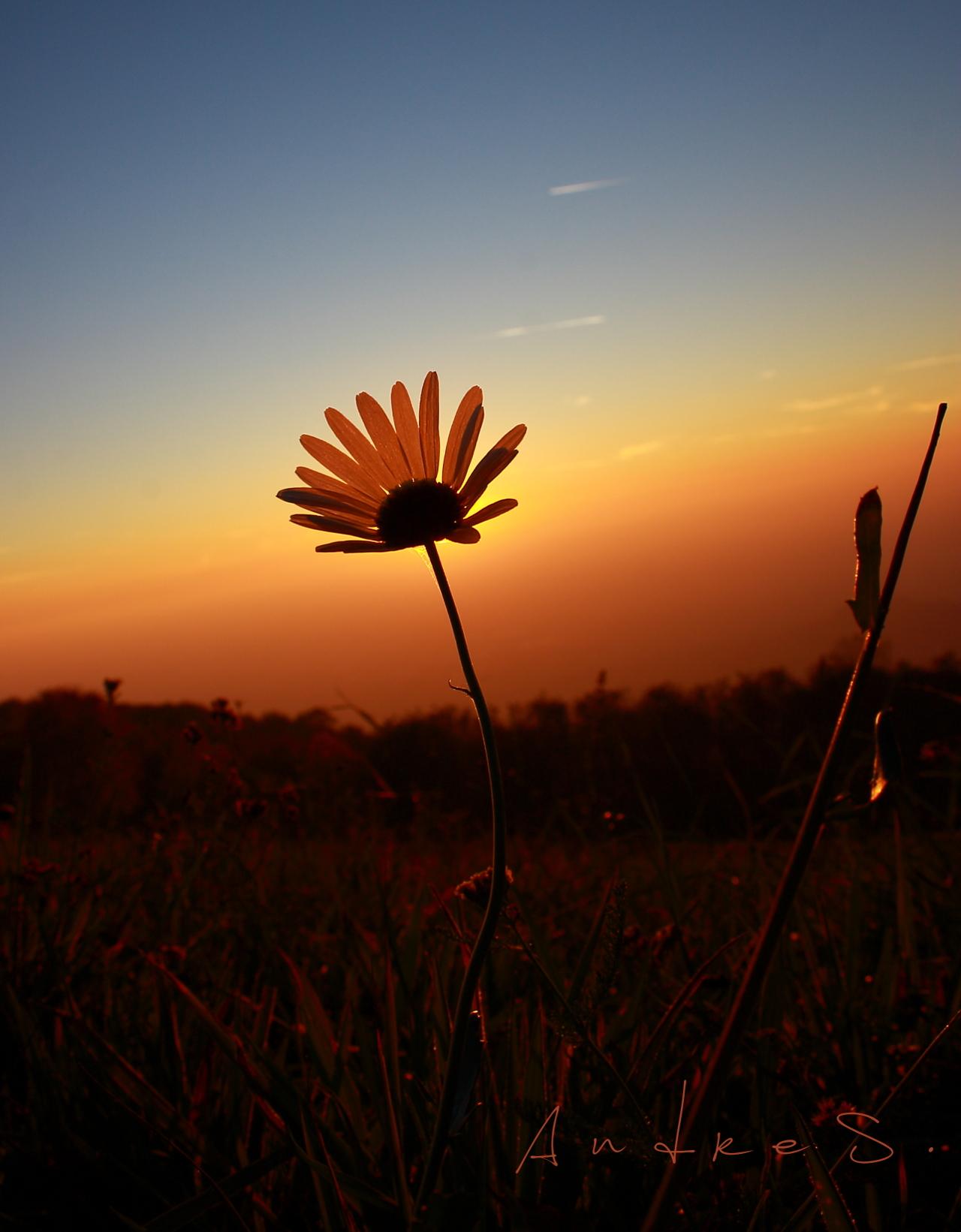 I enjoy the sunset...