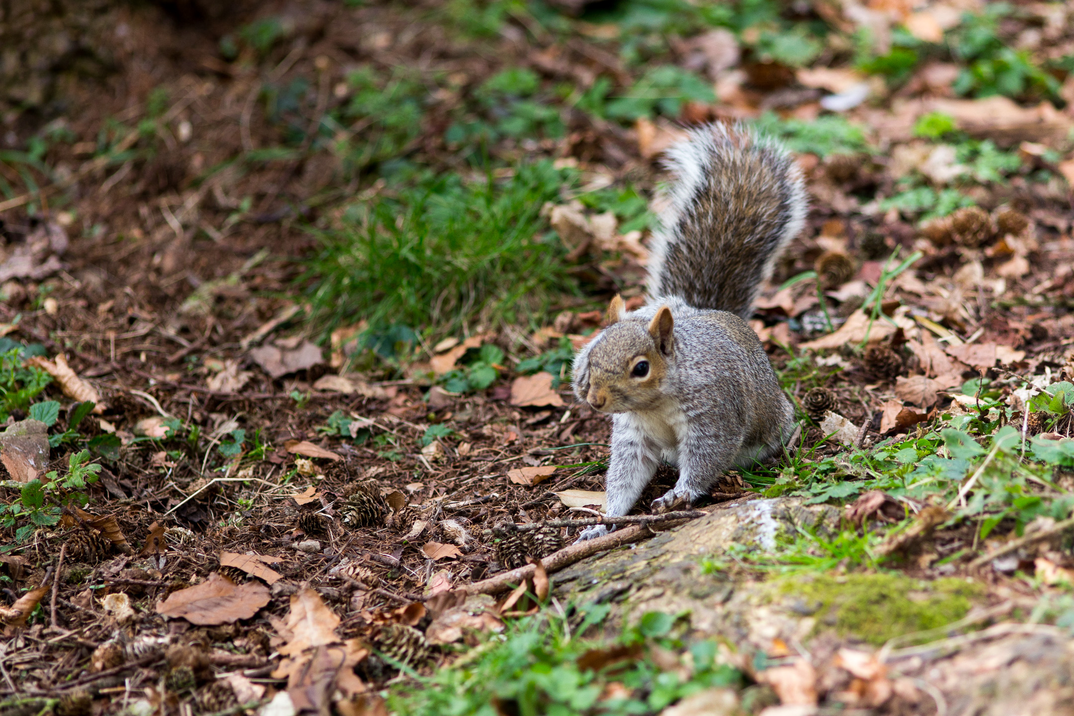 Squirrel in my park...