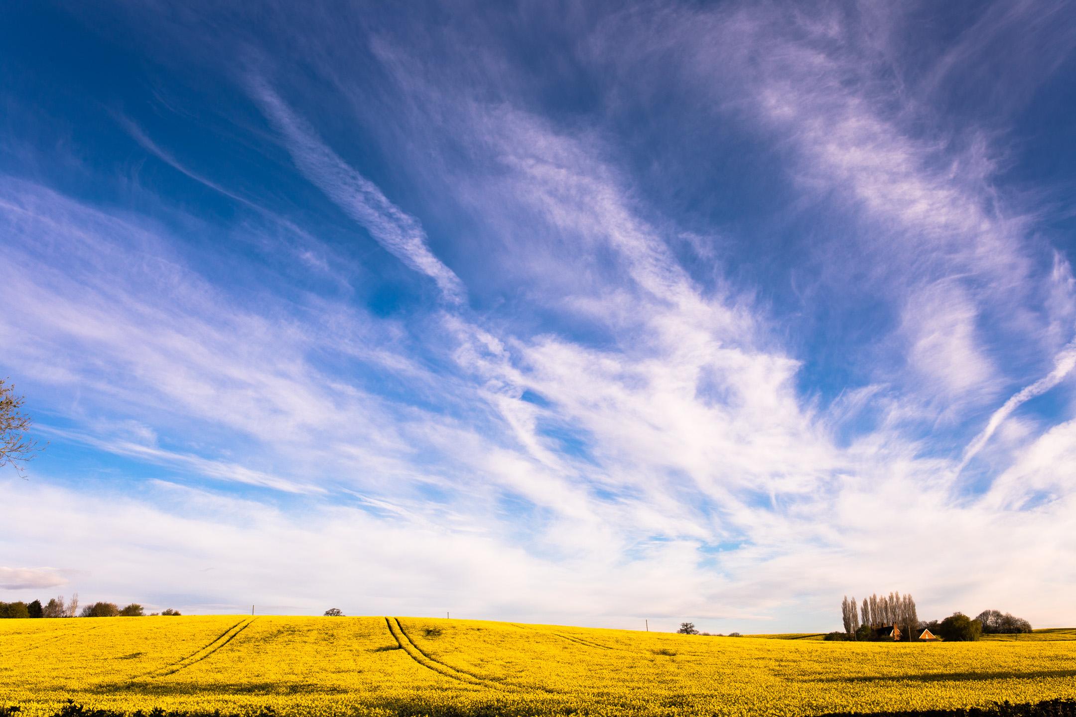 Yellow Fields Dreams...
