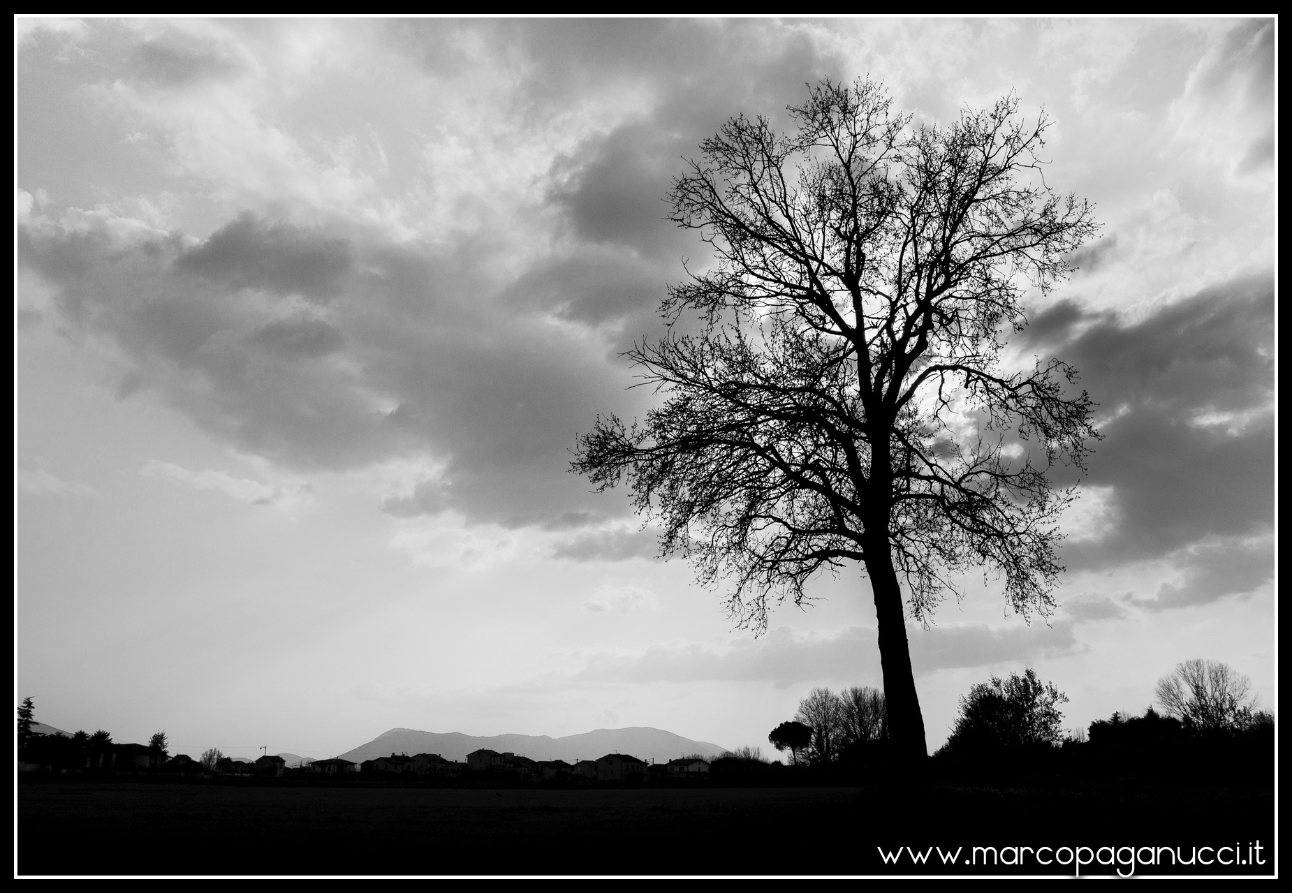 A tree in sunlight...