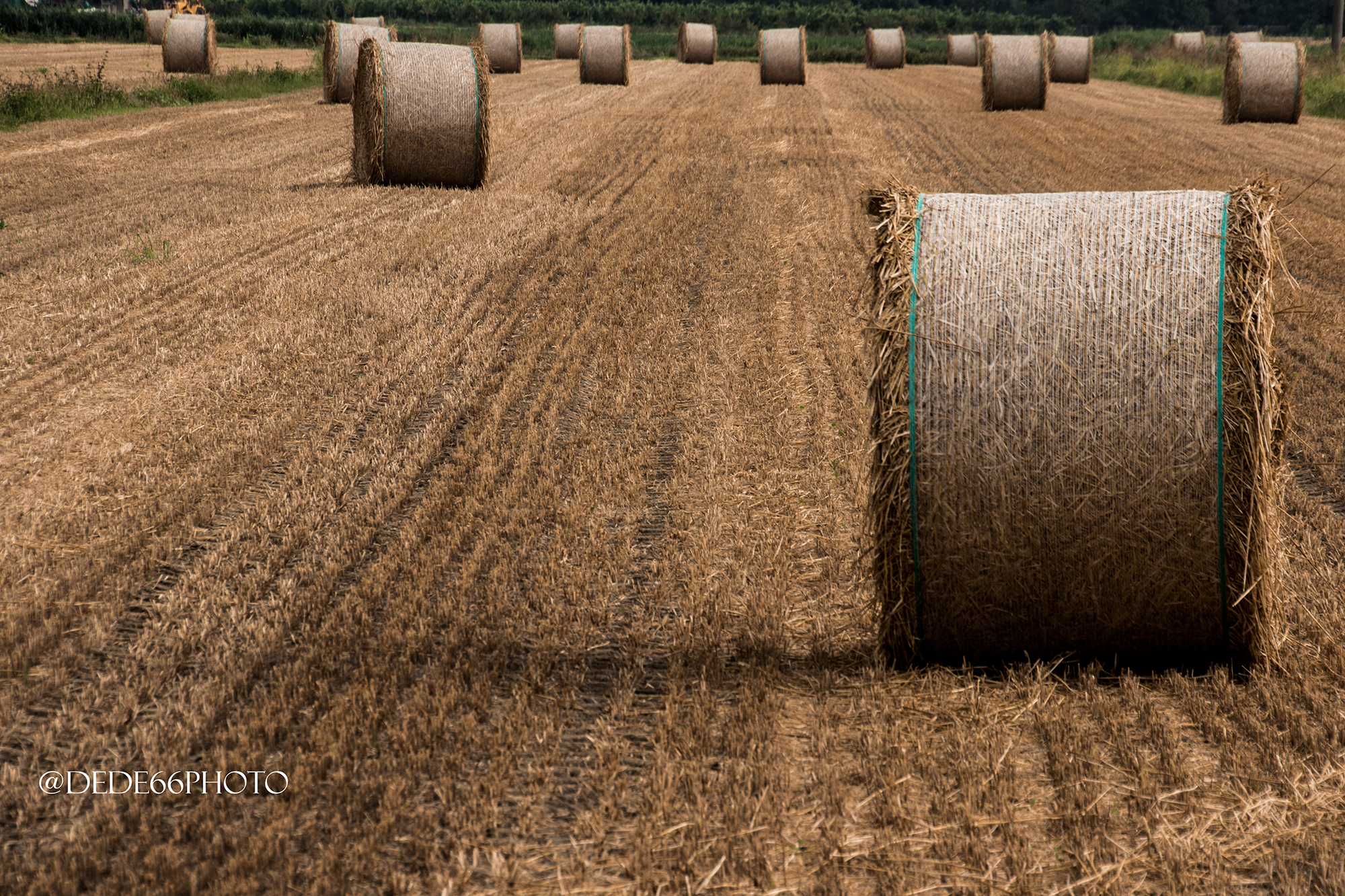 Formation of bales...