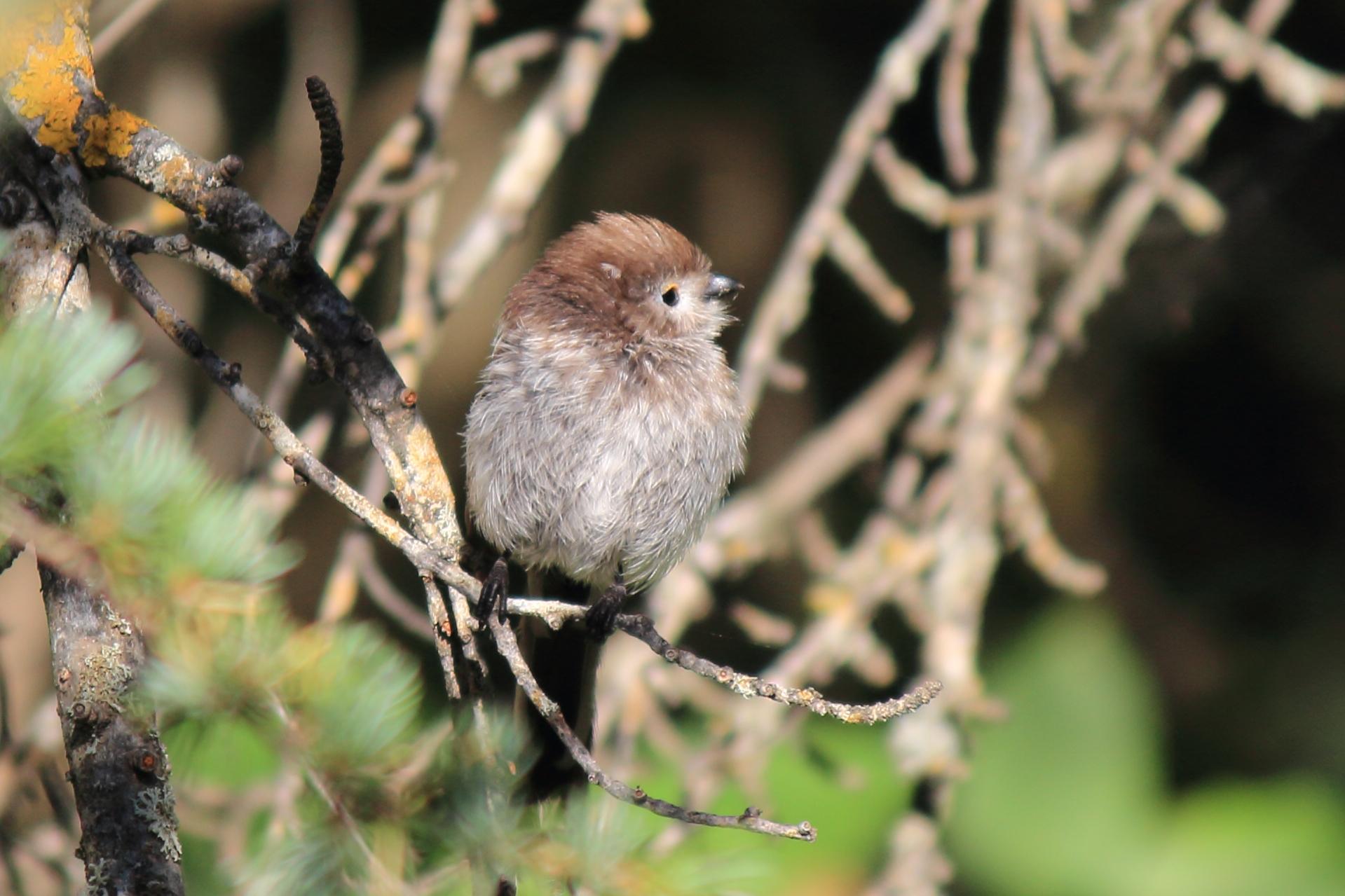 Little Birds 2...