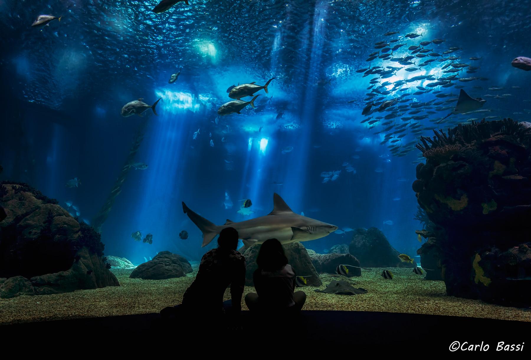 The Lisbon Oceanarium...