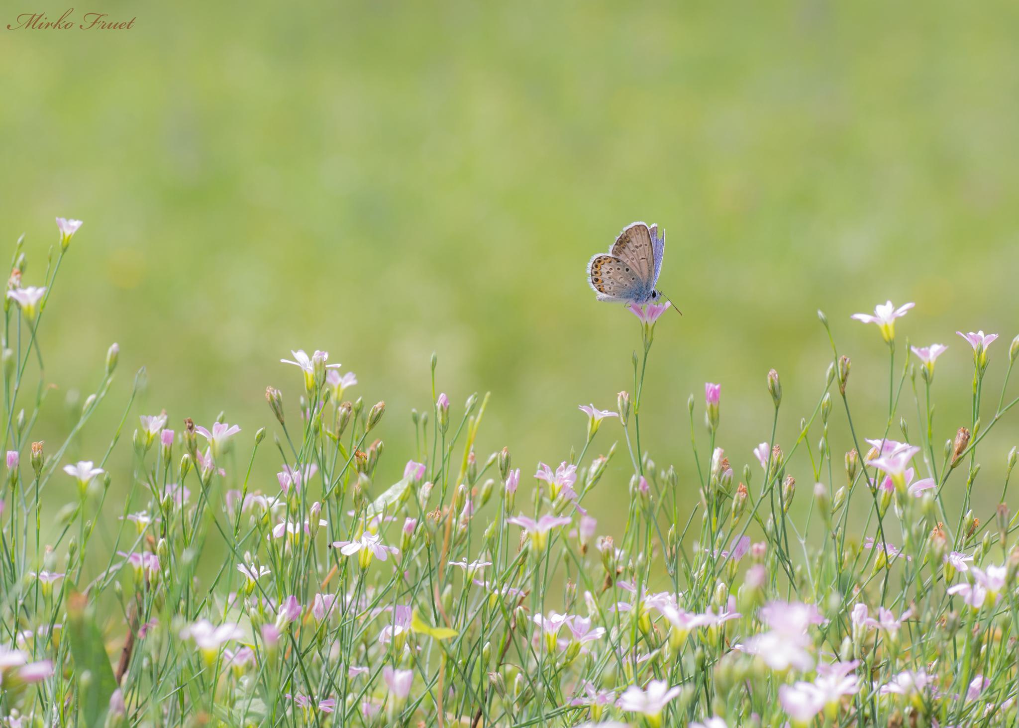 Il mondo delle farfalle...