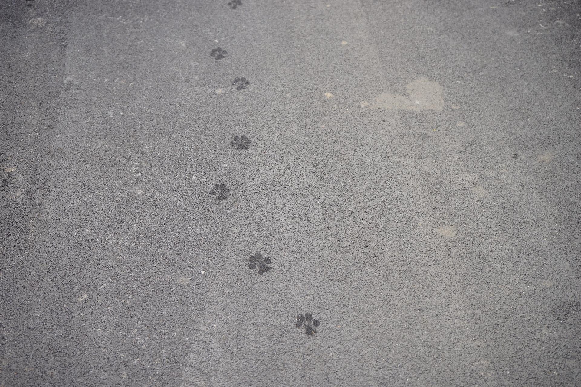 strolling...