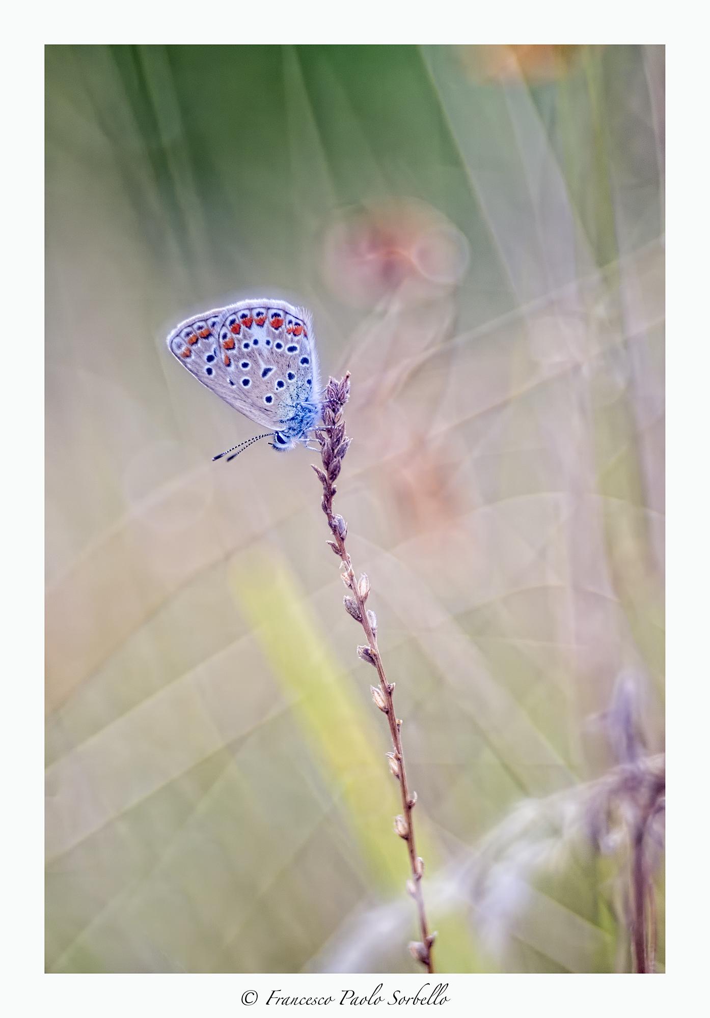 light fly...