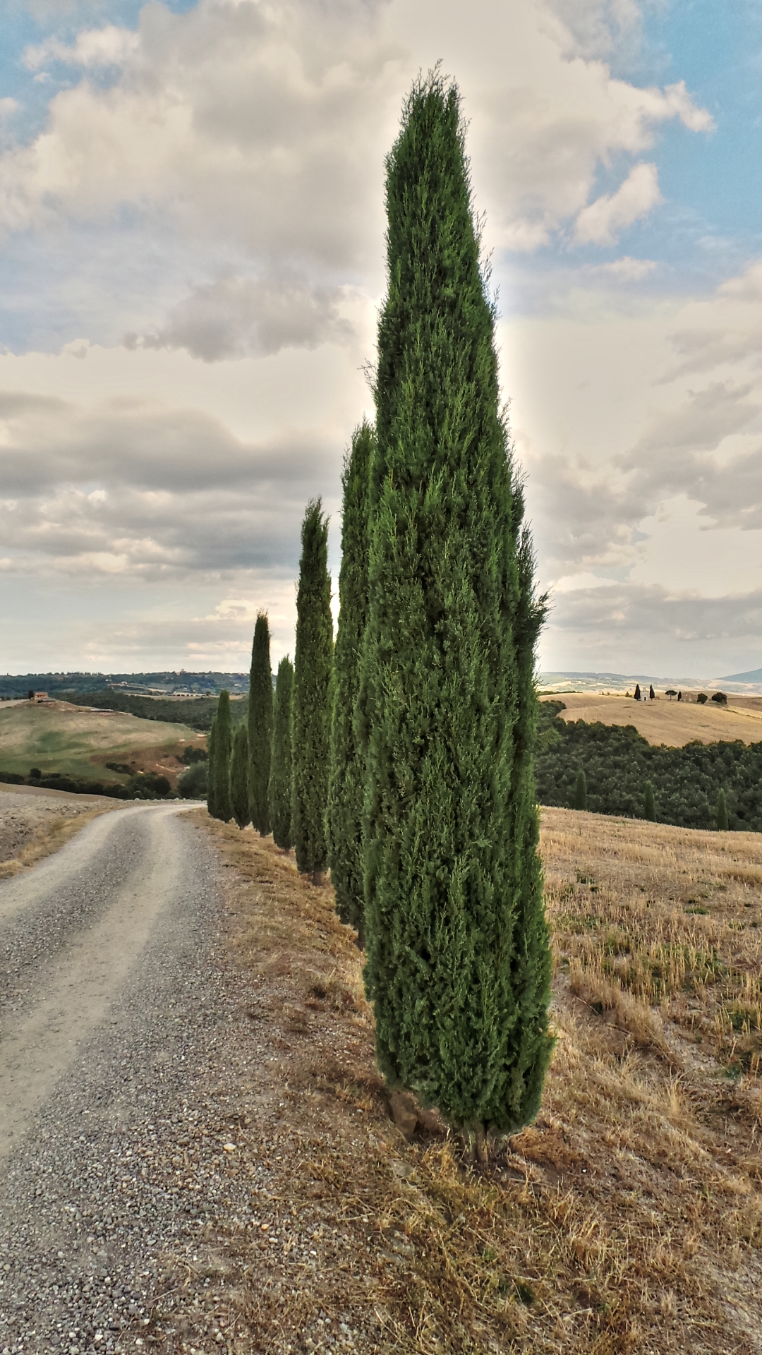 Cypresses in San Quirico D'Orcia...