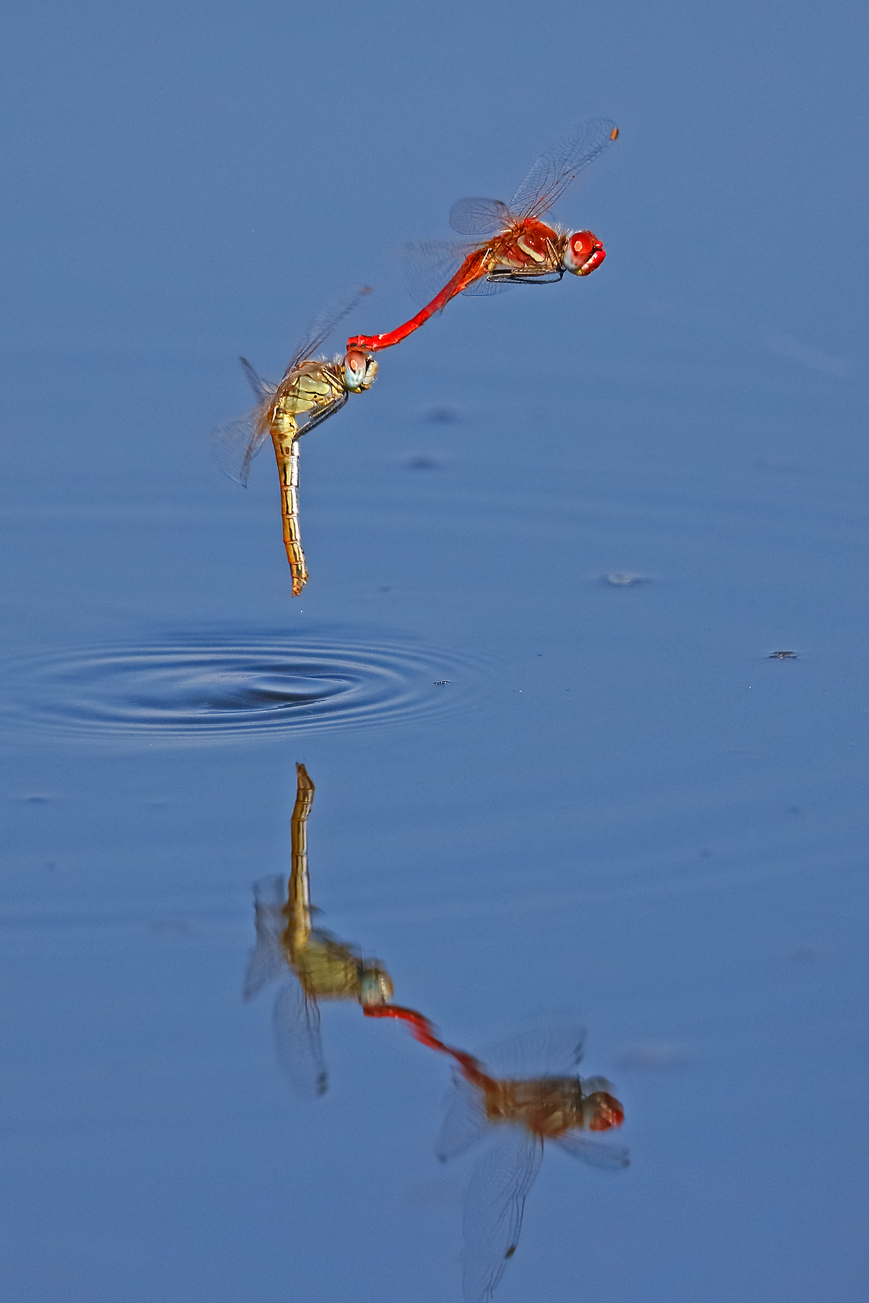 The deposition of dragonflies...