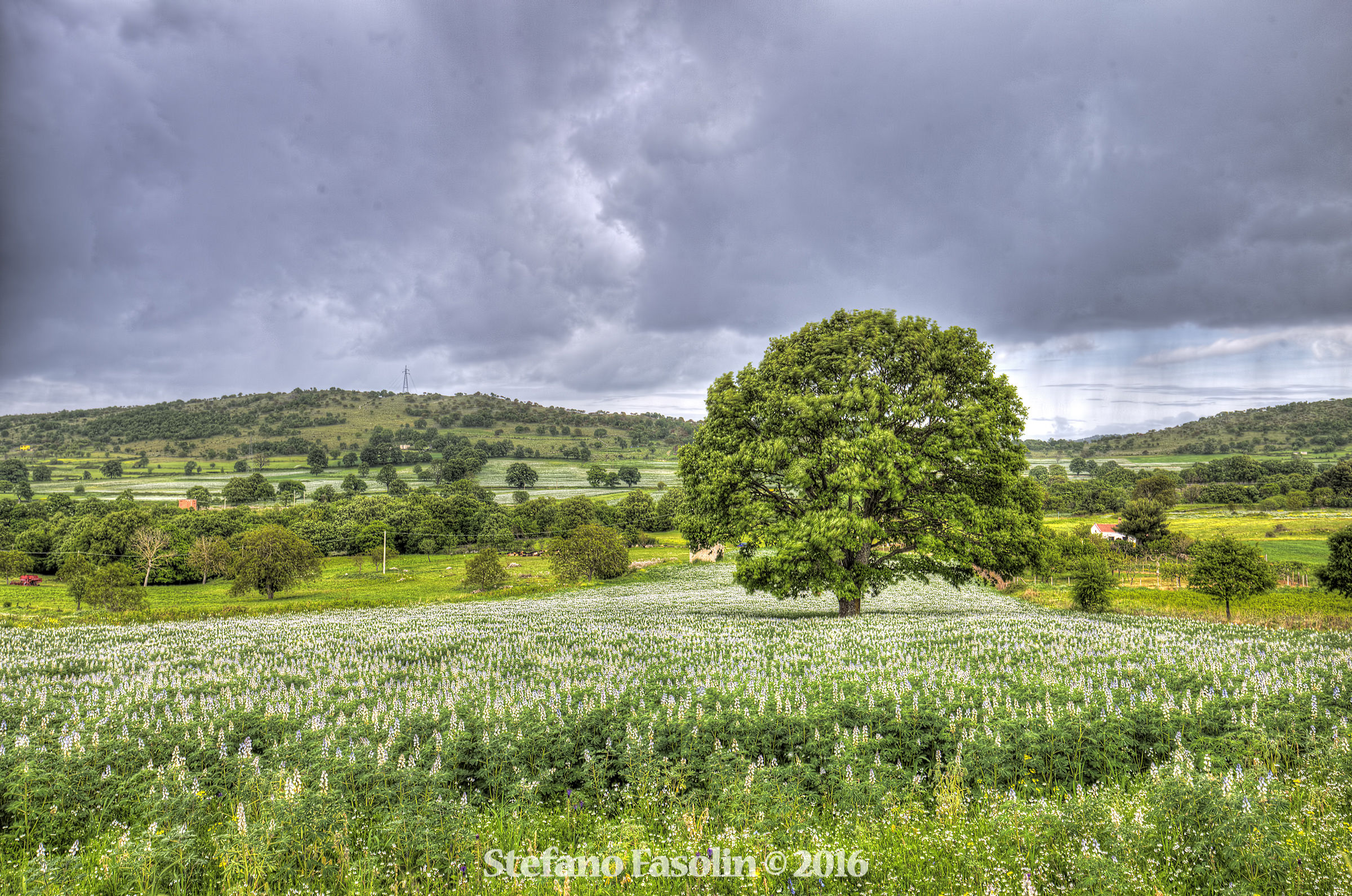 Umbra Forest - Gargano...