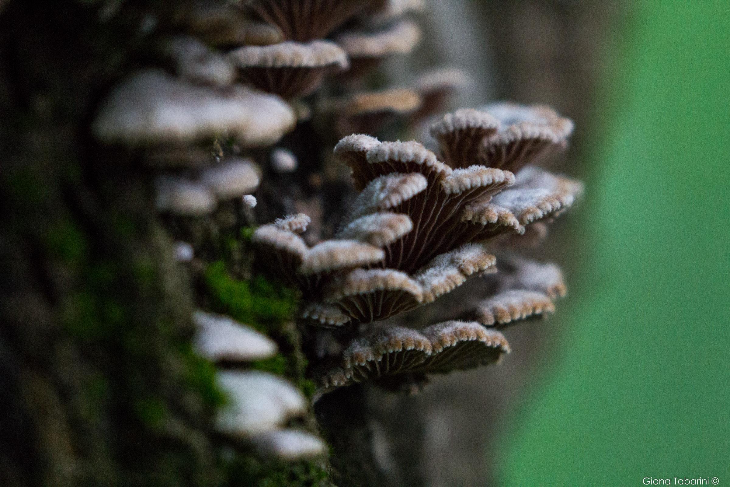 Funghi...