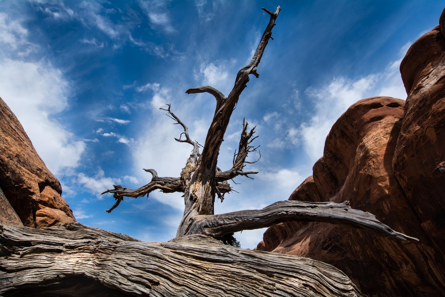 Dead Tree...