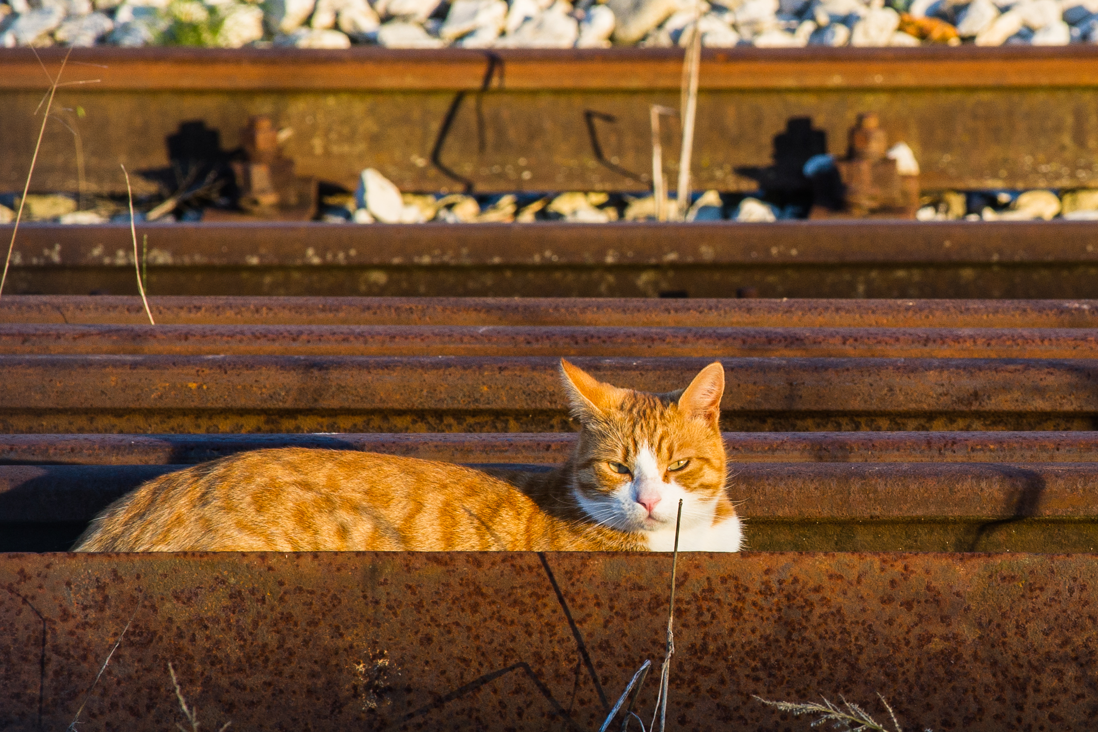 The cat with the rails...