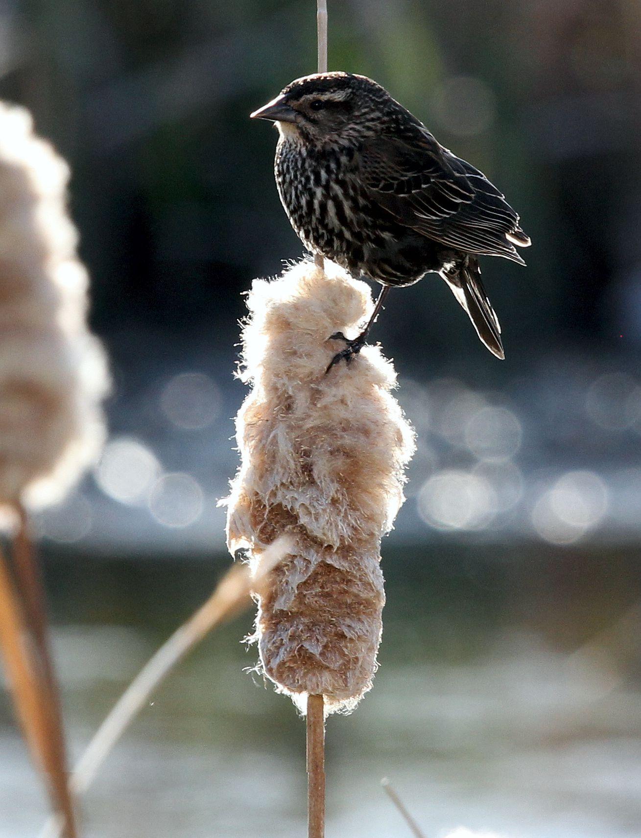 Small bird...