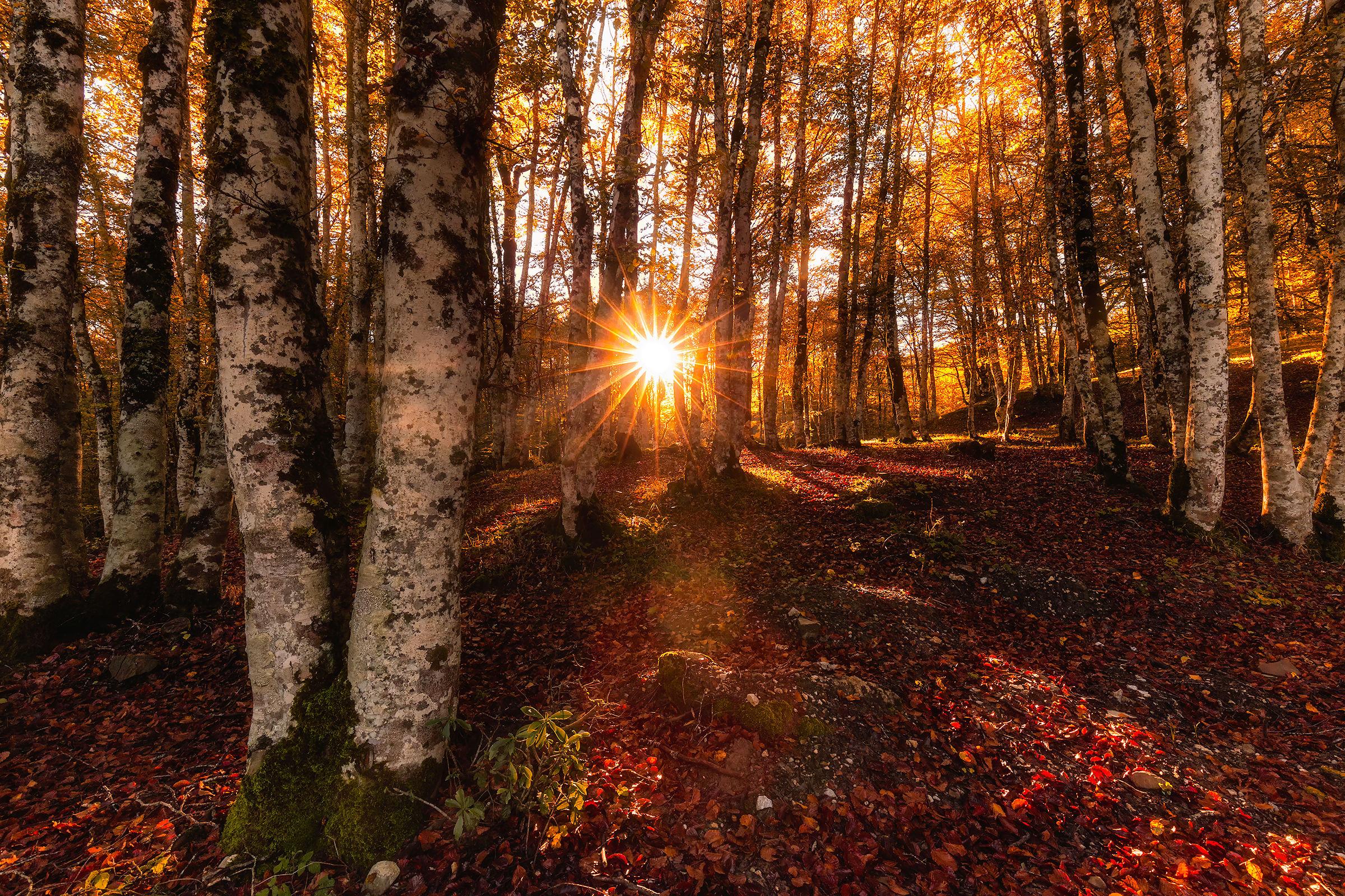 Una bella alba autunnale...