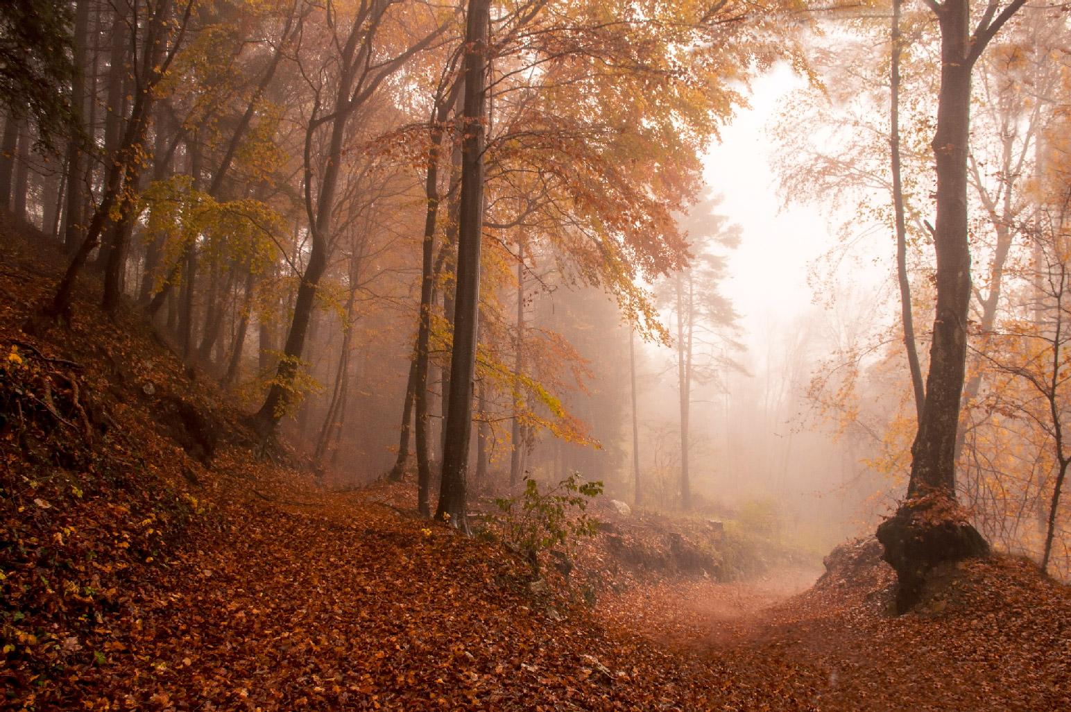 In the autumn fog...
