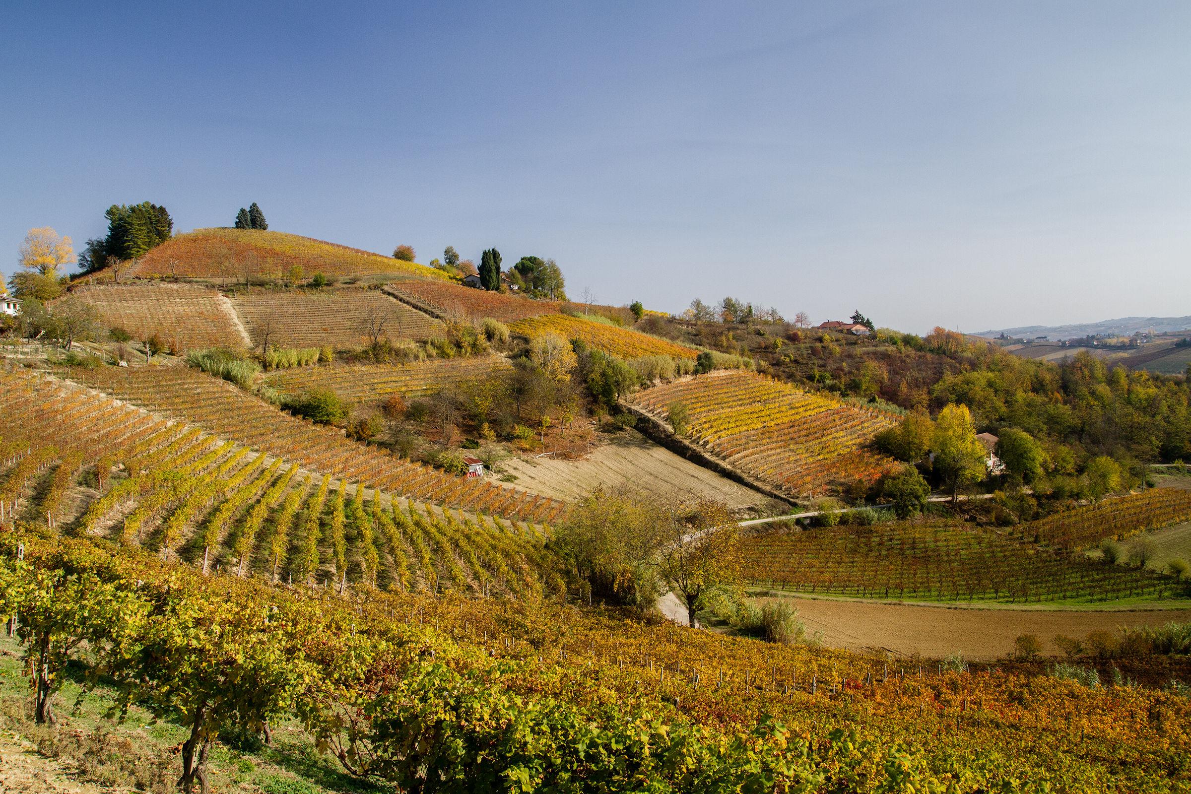 Vineyards in autumn...
